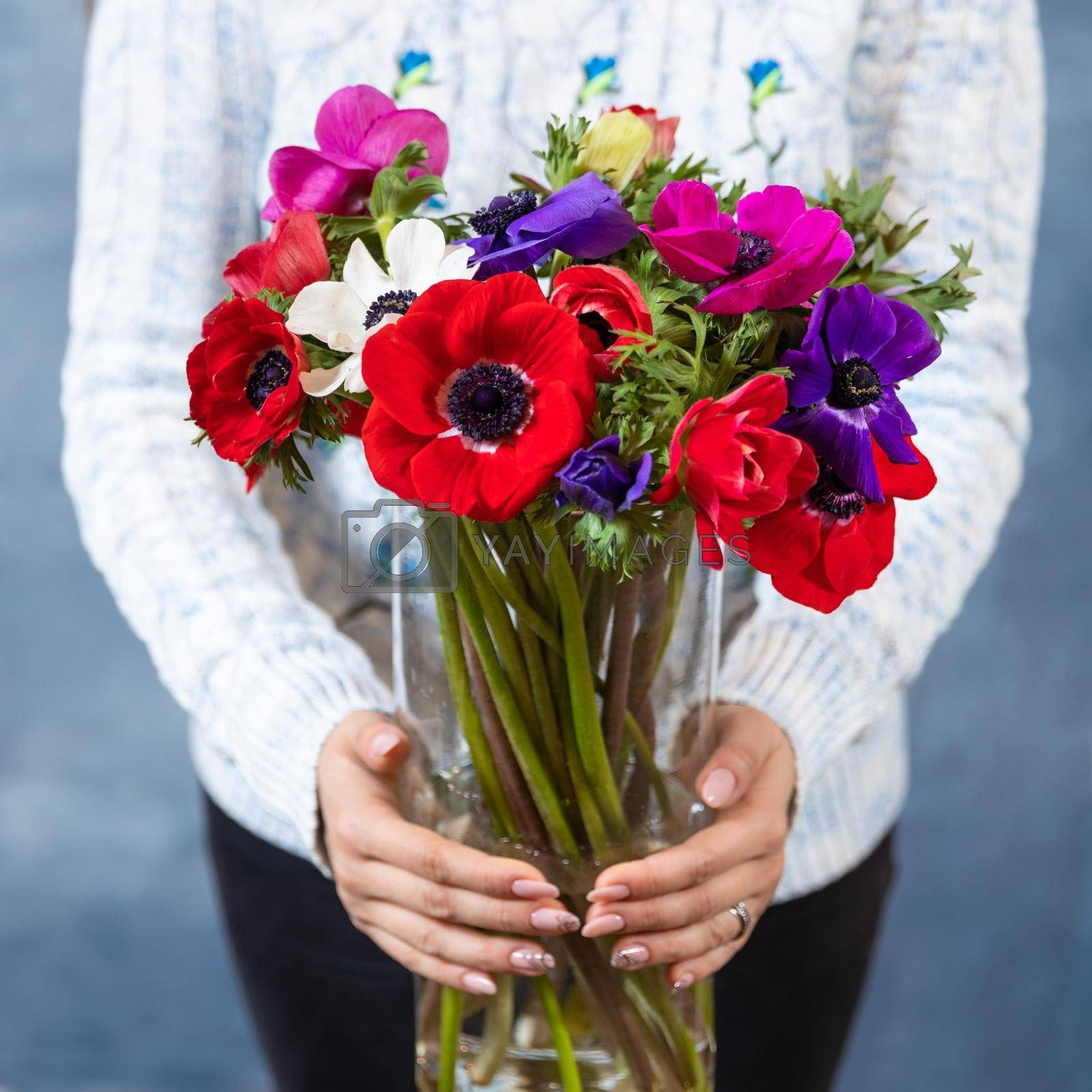 Woman holding red, magenta, pink Papaver rhoeas, Common poppy flower bouquet