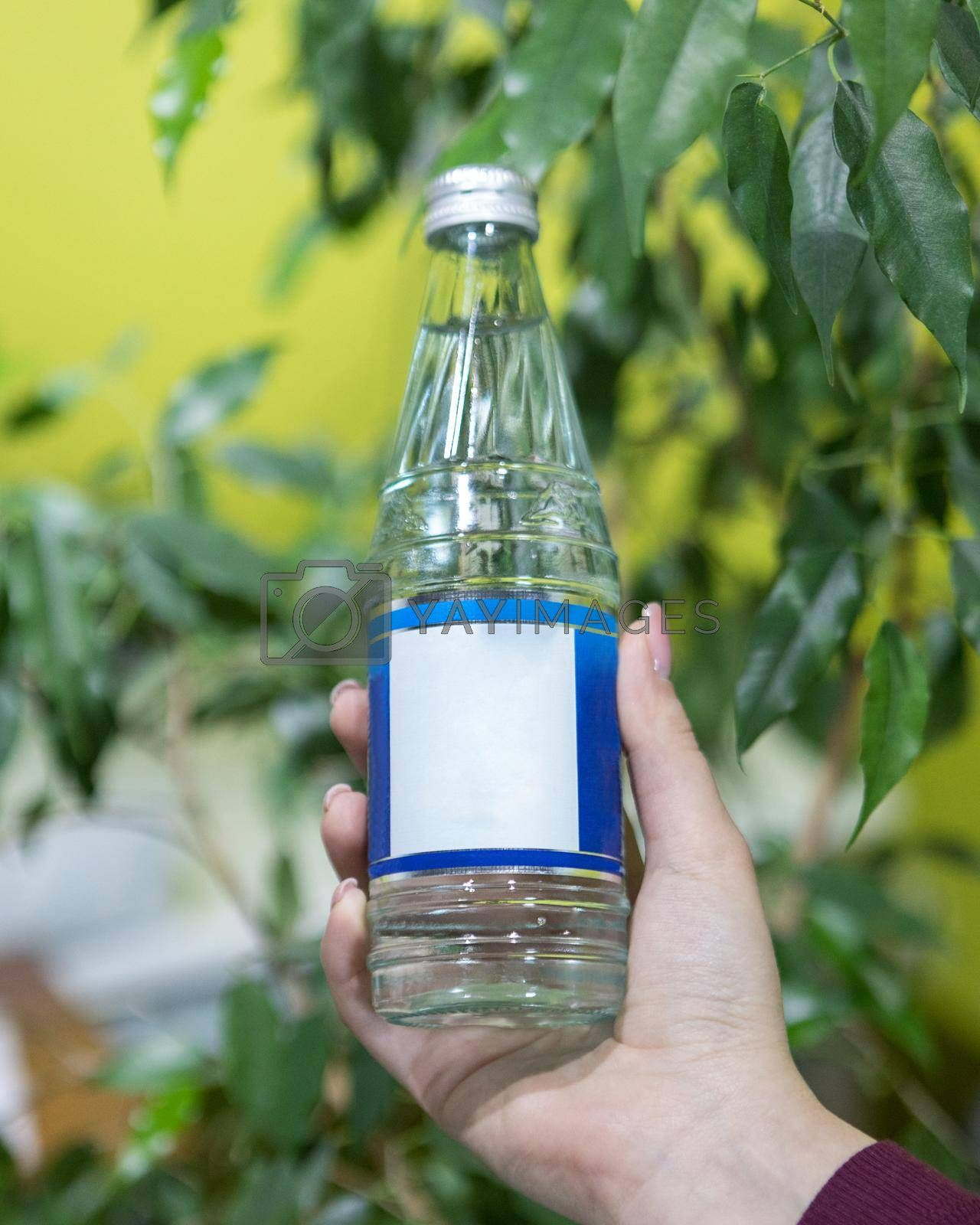 Holding a glass water bottle with green background