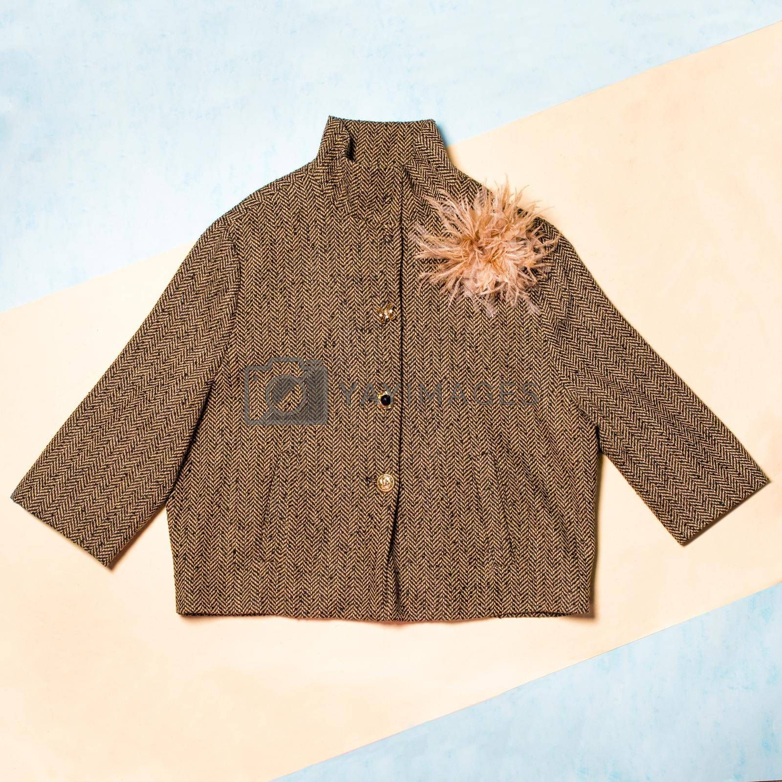 Brown color woman autumn coat isolated