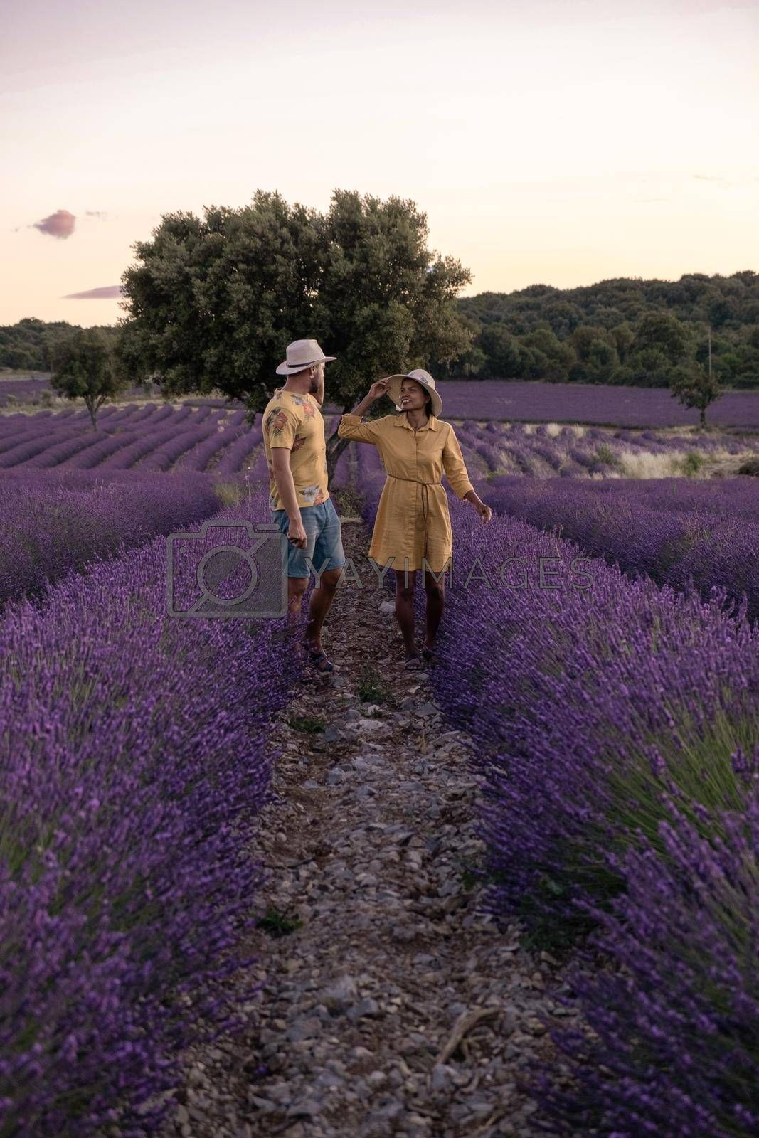 couple men and woman watching sunset in lavender fields in the south of France, Ardeche lavender fields iduring sunset, Lavender fields in Ardeche in southeast France.Europe