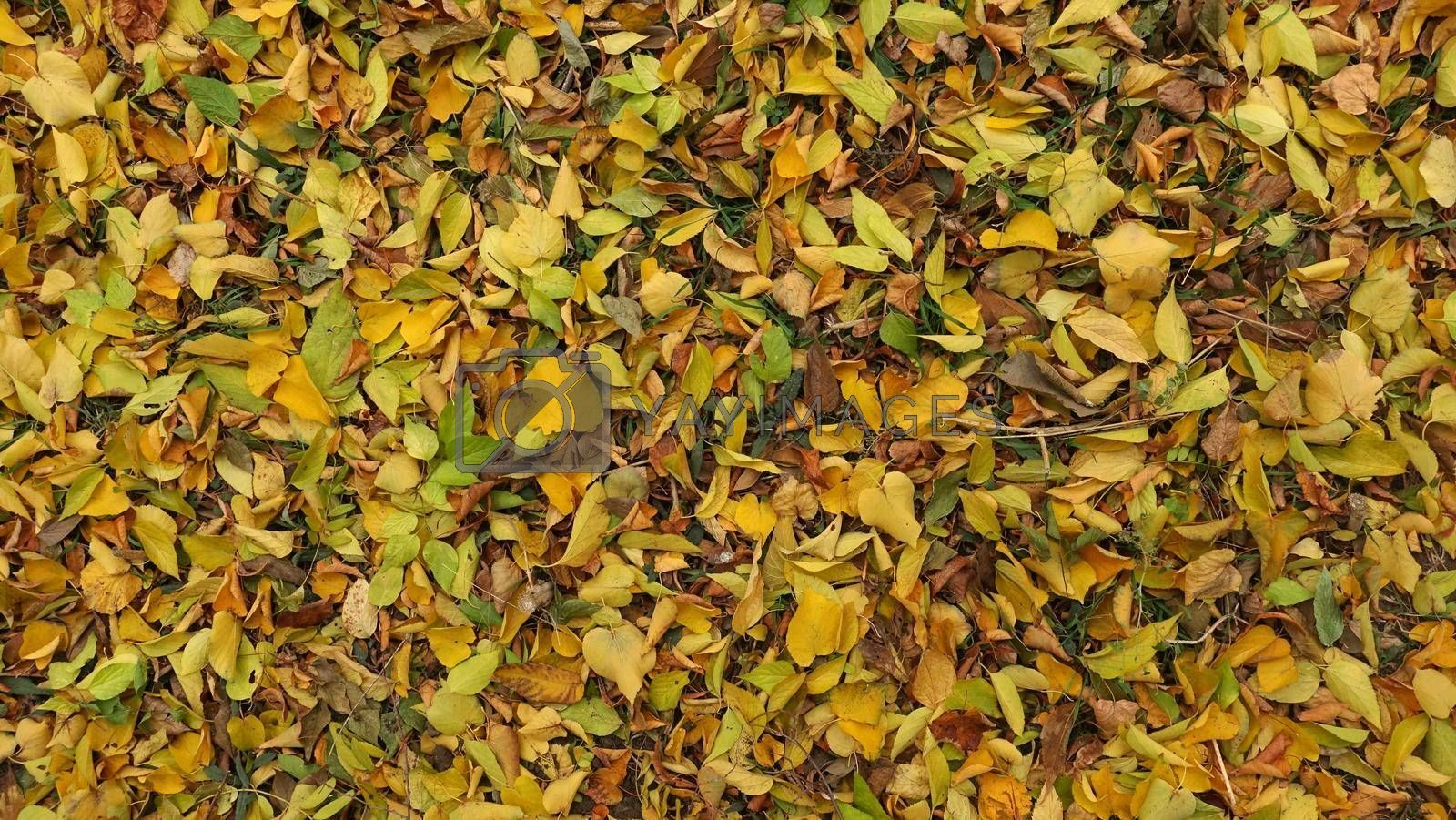 Royalty free image of Beautiful autumn background for collage. by Jannetta
