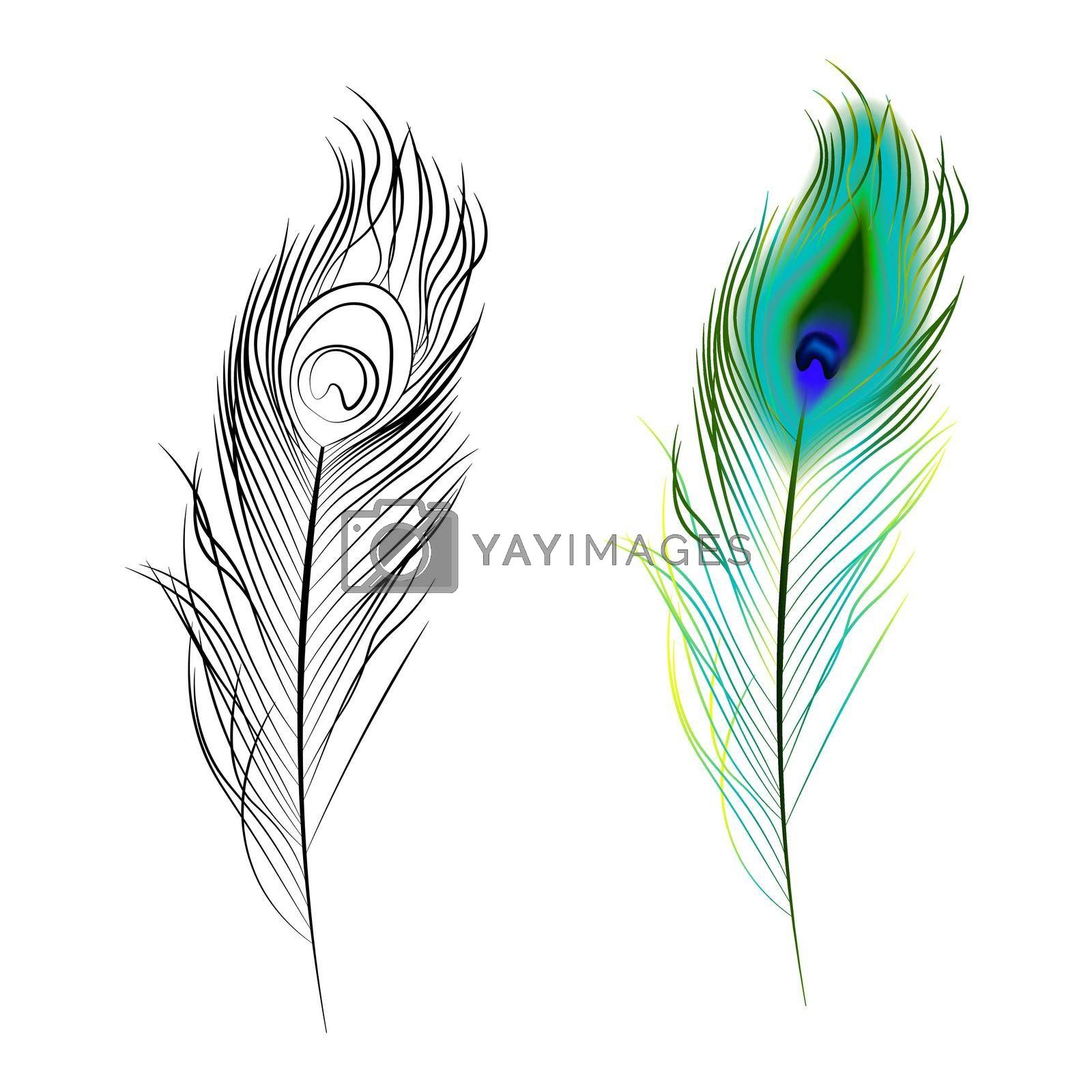 bright multi colored and black and white peacock feather. Design element. Isolated vector on white background