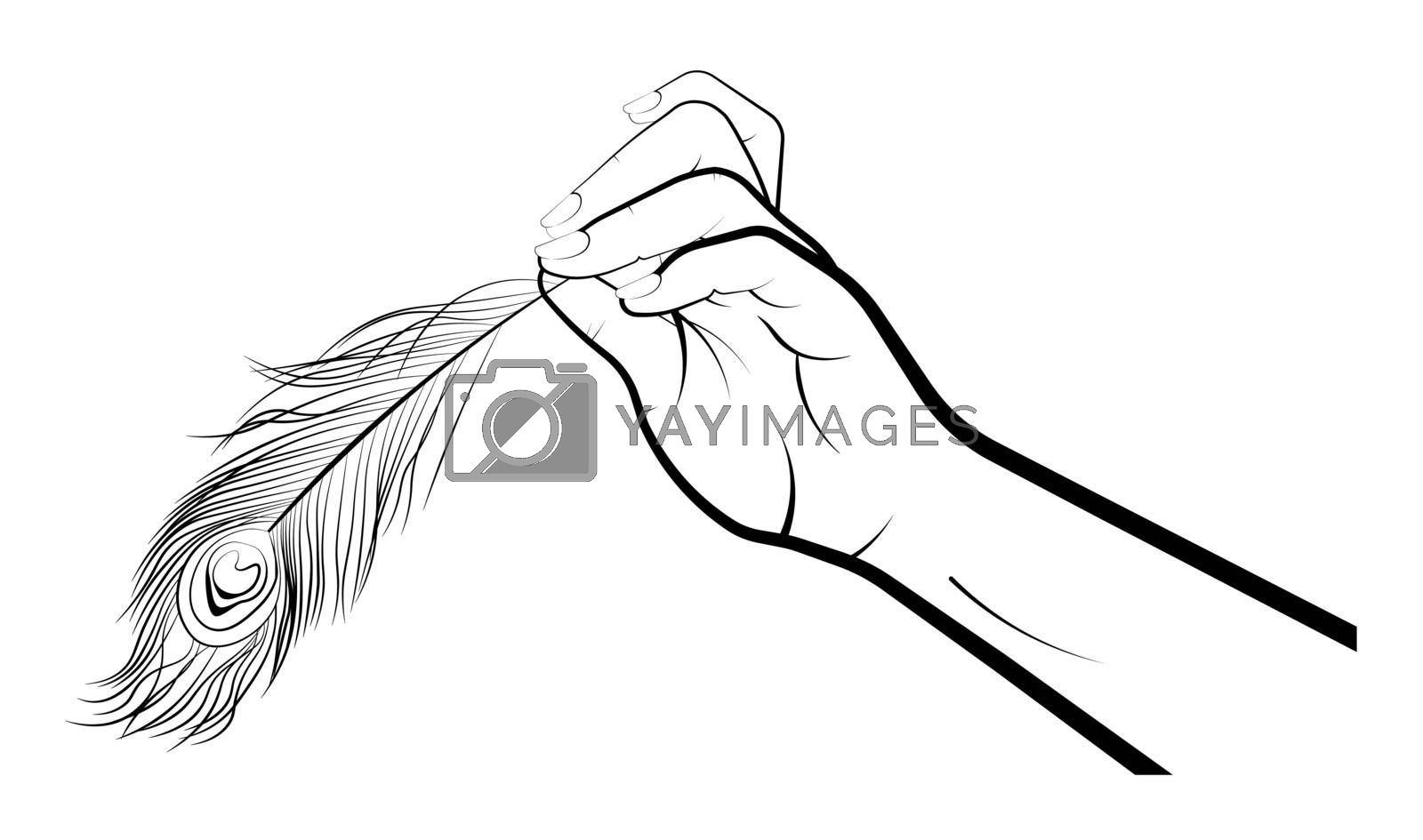 female hand gently holds the peacock feather with two fingers. Tenderness, lightness, accuracy. Gestures. Isolated vector on white background