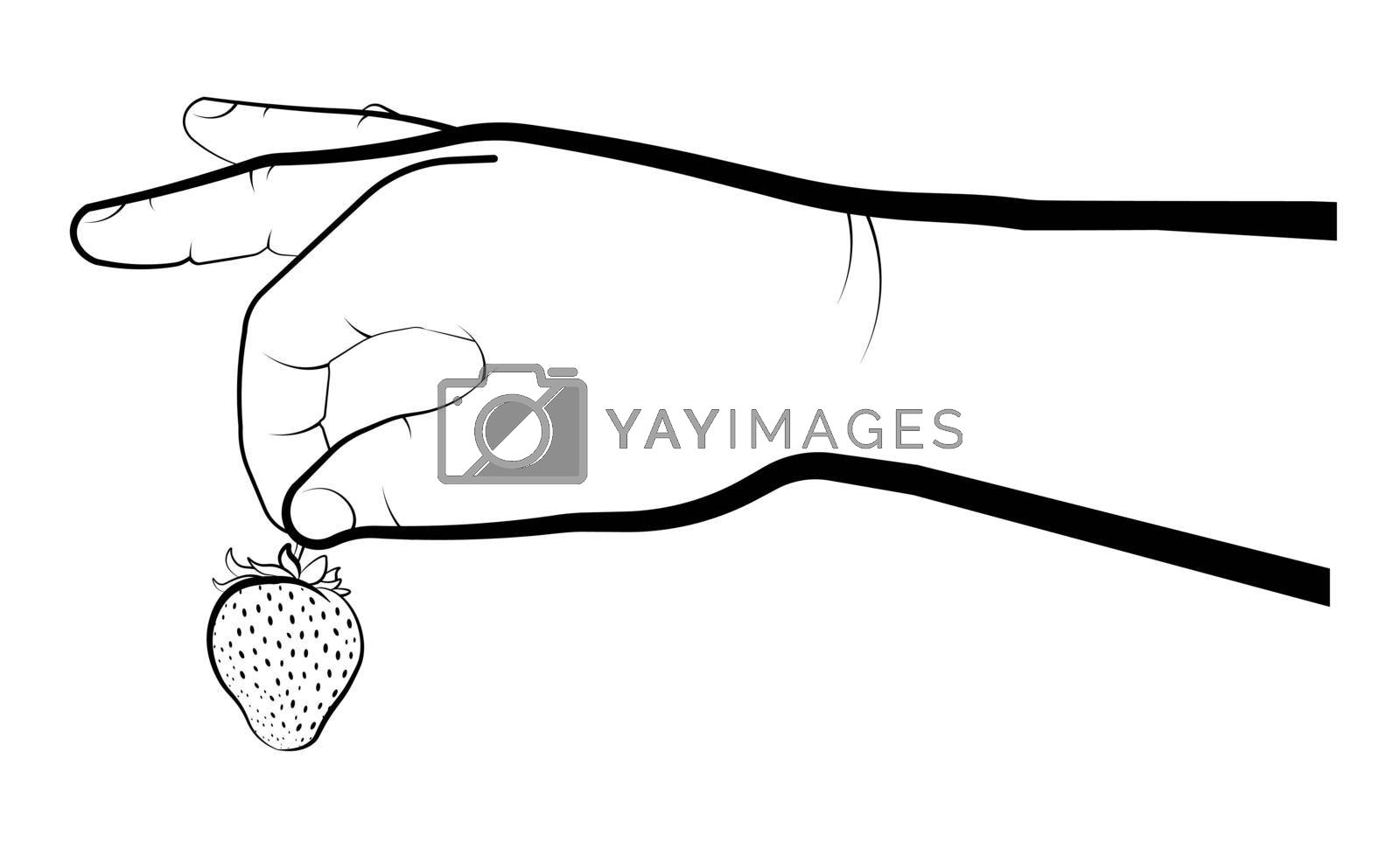 mans hand holds a strawberry. Summer berries, ripe juicy fruts. Cooking desserts. Isolated vector on white background
