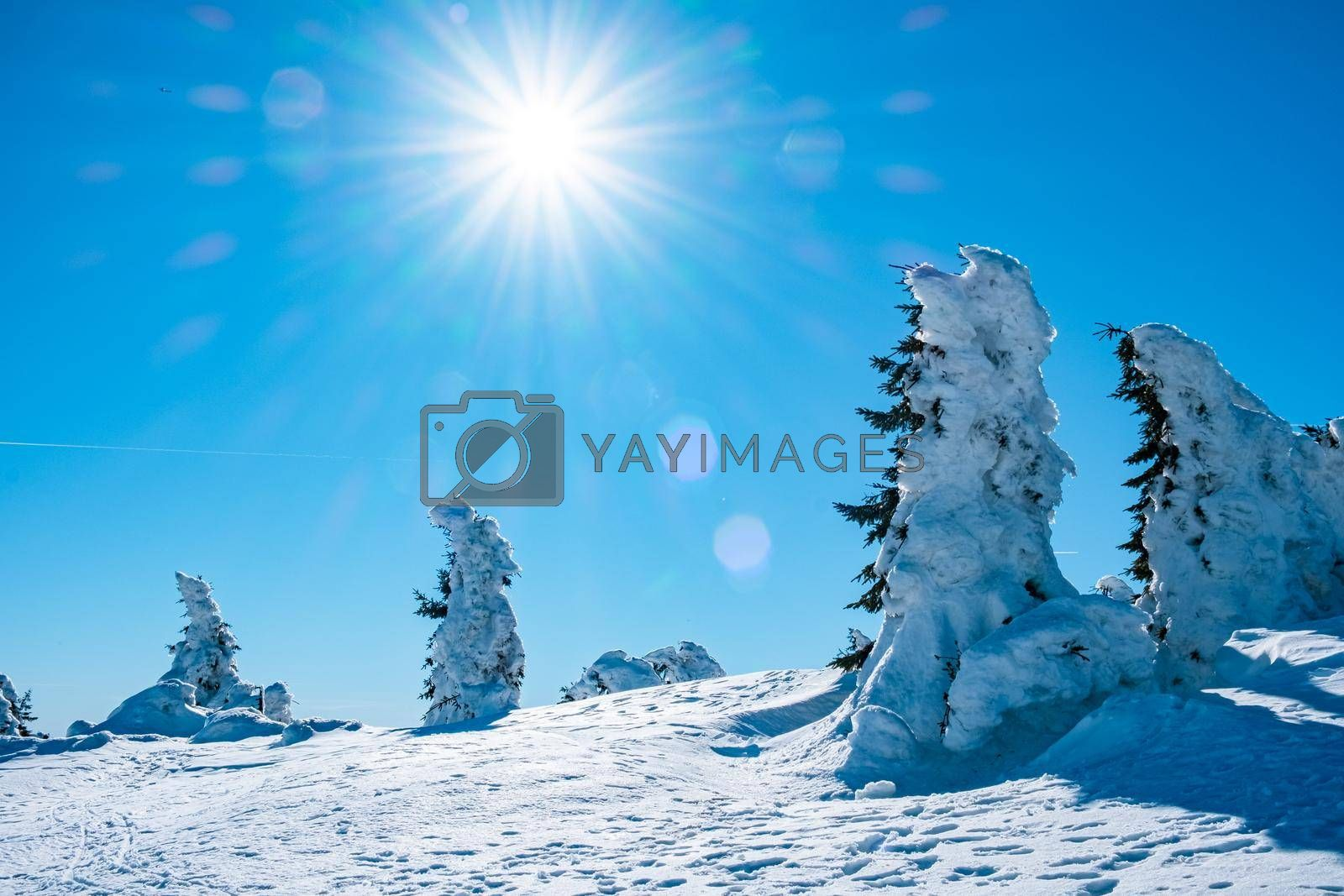 Harz national park Germany, the winter landscape, Brocken, Harz National Park Mountains in Germany Europe