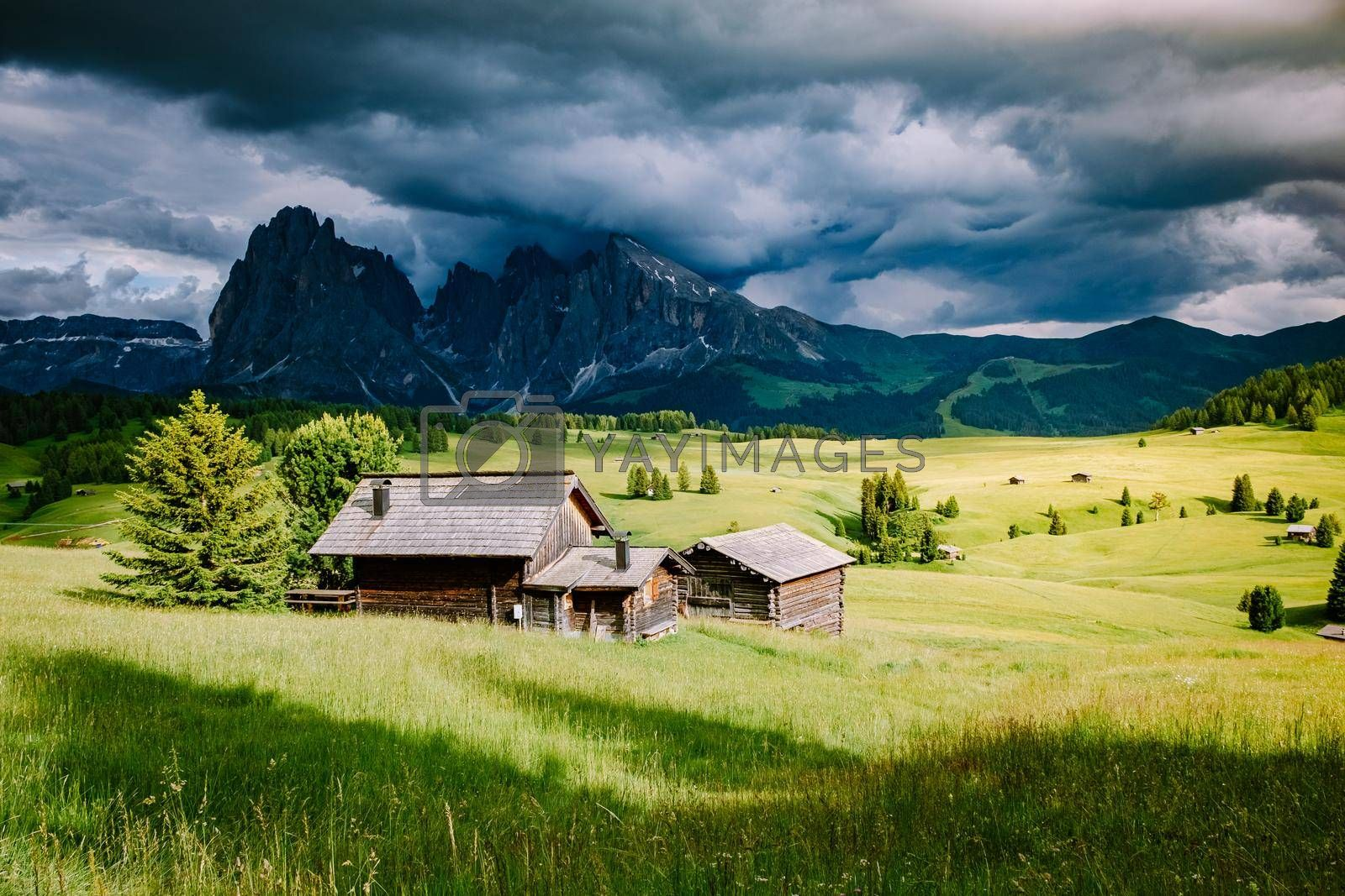 Alpe di Siusi - Seiser Alm with Sassolungo - Langkofel mountain group in background at sunset. Yellow spring flowers and wooden chalets in Dolomites, Trentino Alto Adige, South Tyrol, Italy, Europe. Summer weather with dark clouds rain