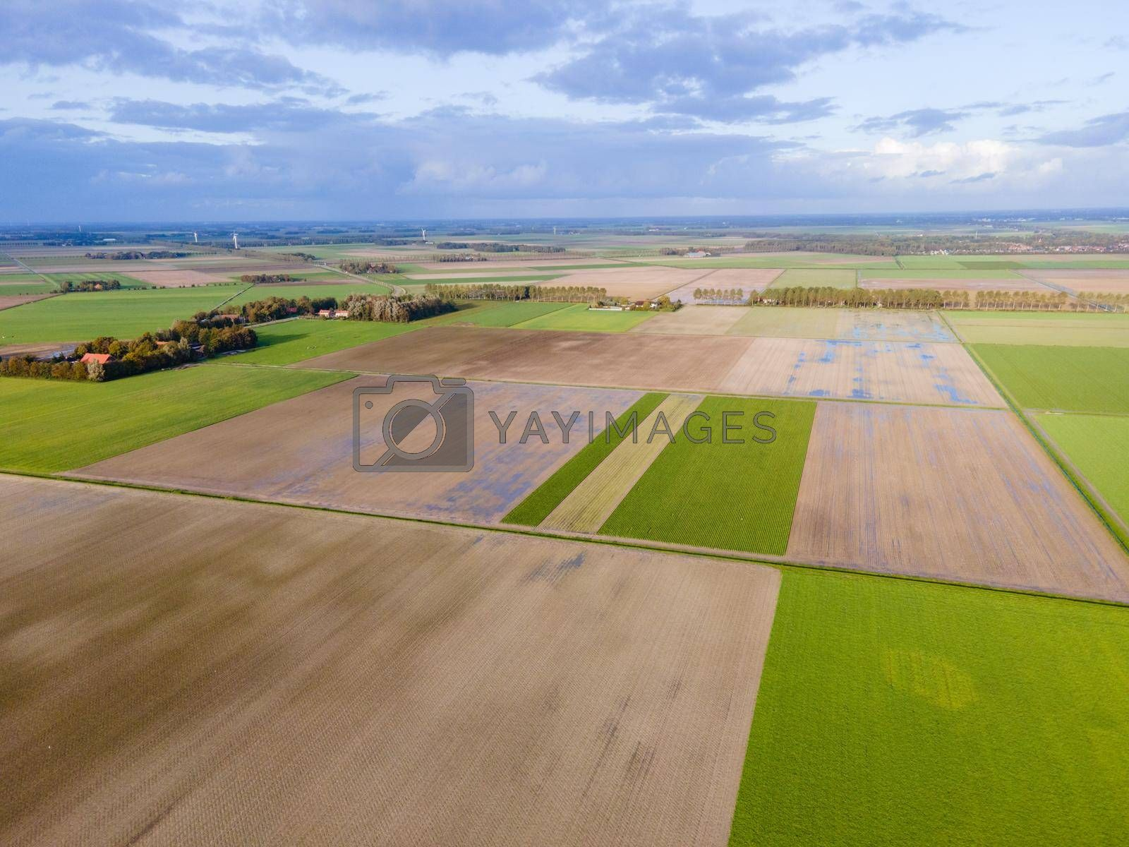 clean green meadows in the Netherlands, Aerial drone view of green fields and farm houses near canal from above, typical Dutch landscape, Holland, Netherlands. High quality photo with drone