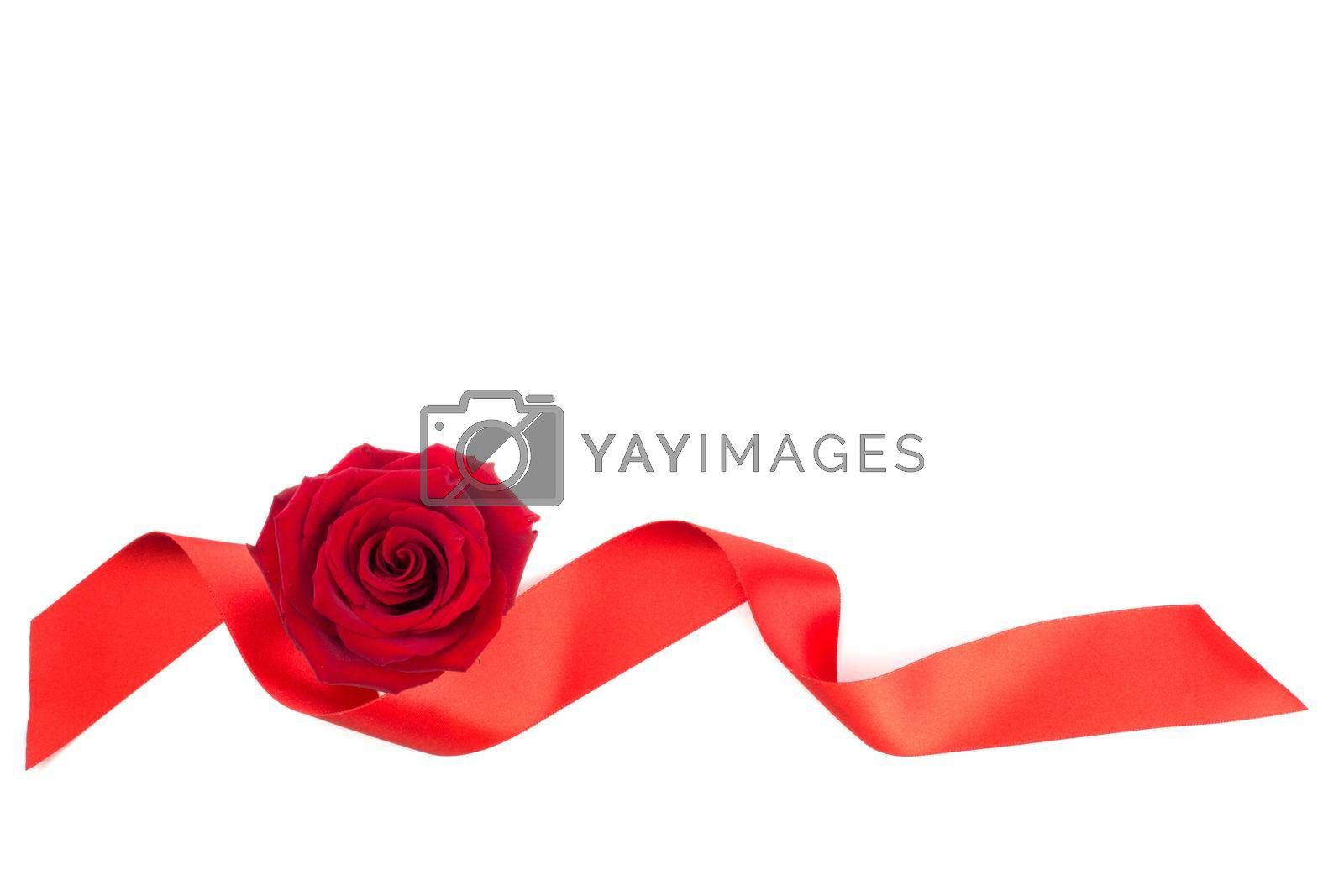 Red rose flower and ribbon arrangement isolated on white background, top view, design element for Valentines day, border frame element