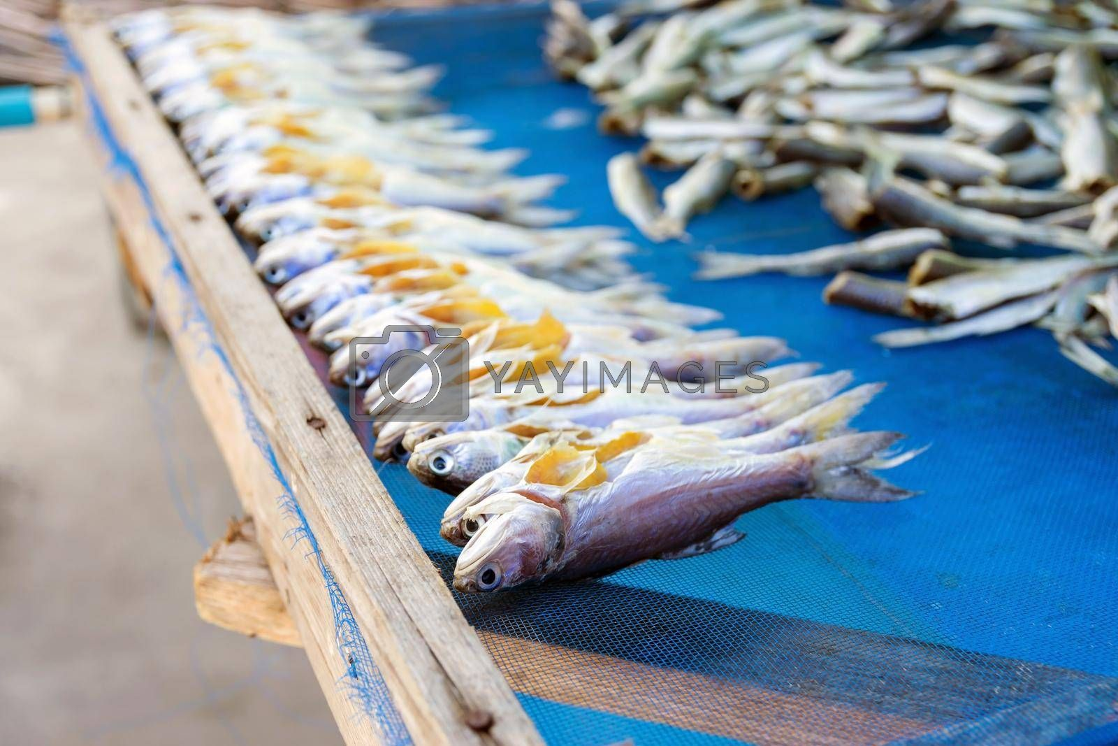 Group of sea fish dried on nets for sale to tourists in the market.