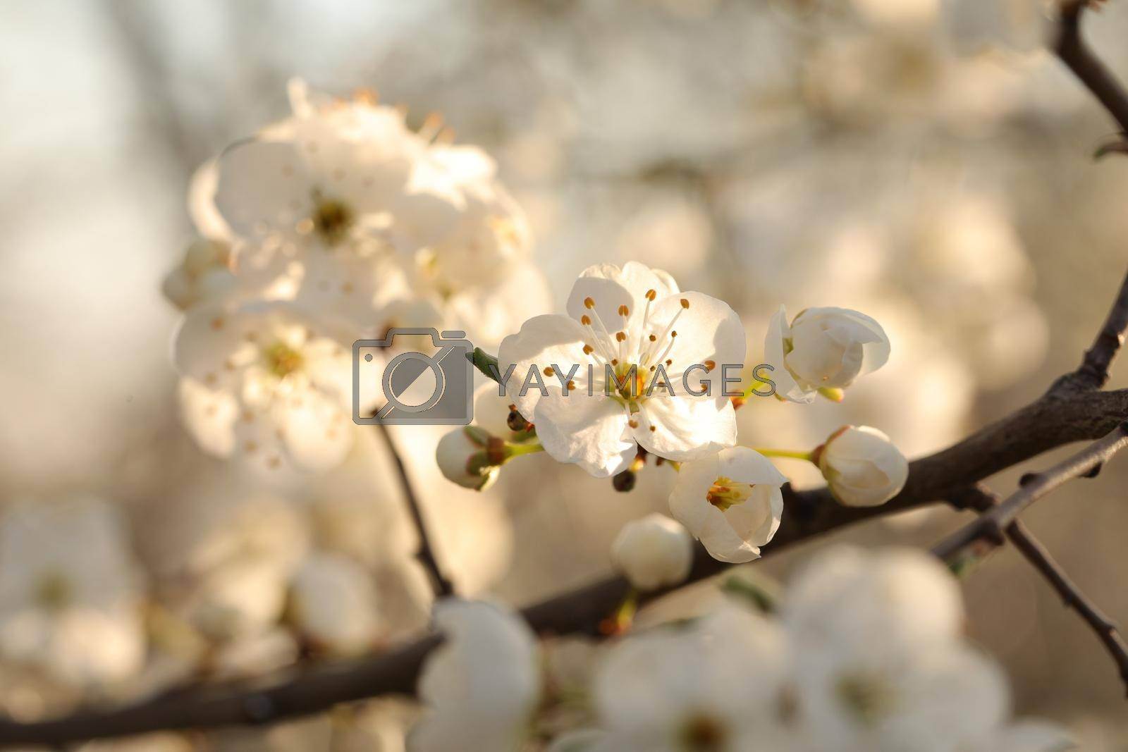 Spring flowers blooming on a tree.