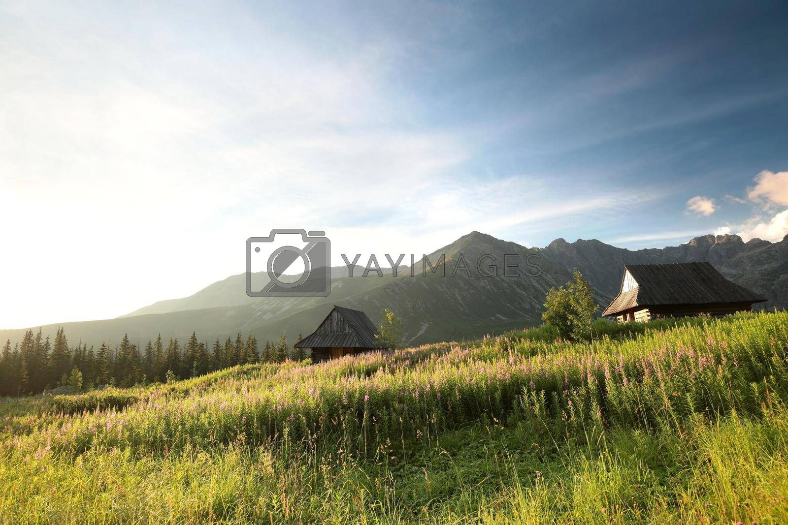 Historical shepherd's huts in the valley surrounded by Carpathian Mountains.
