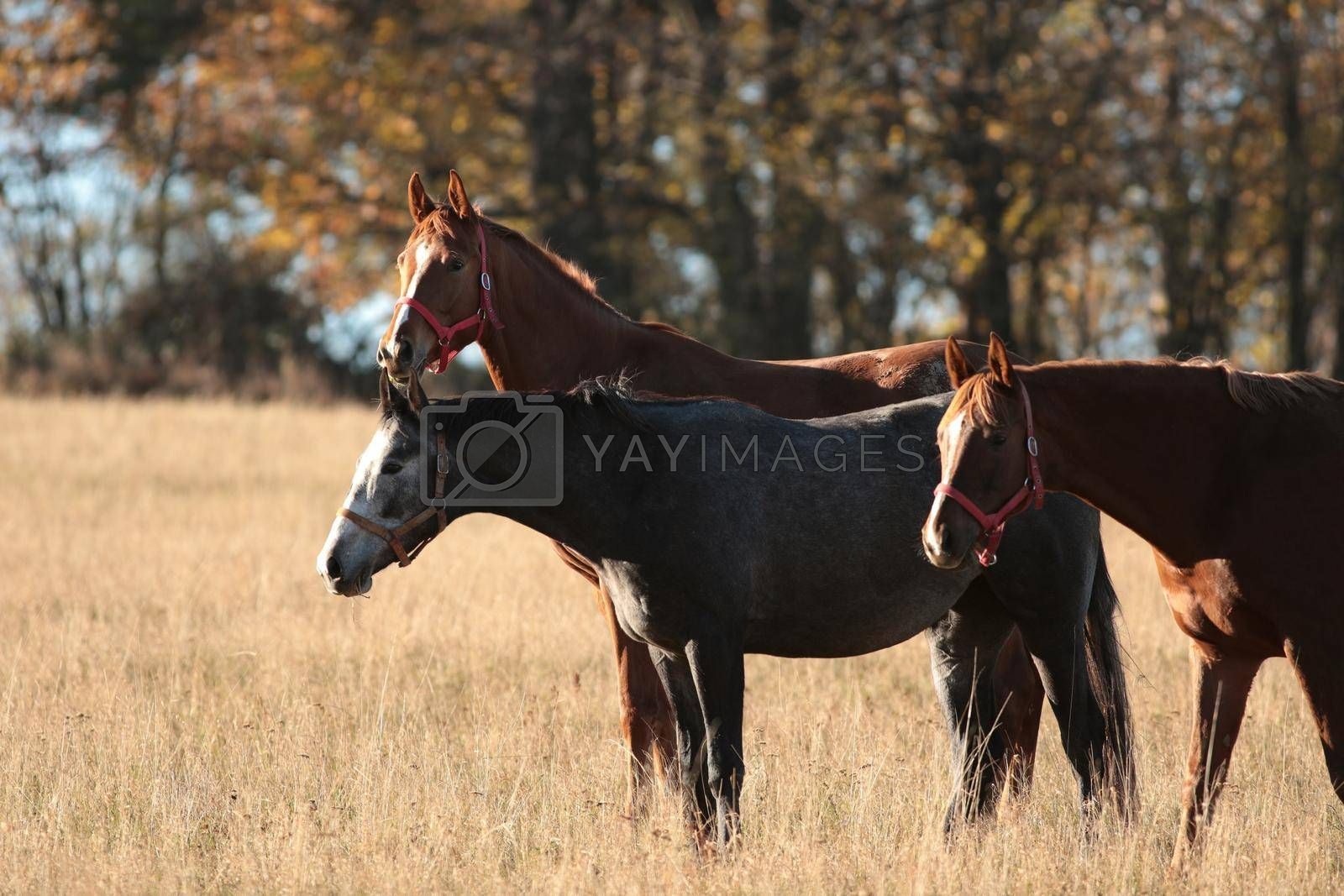 Horses on a background of trees.