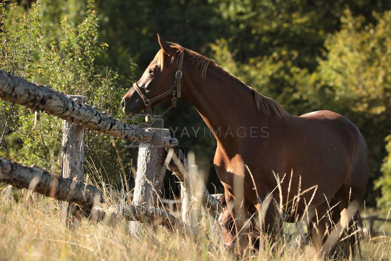 The mare looks at the other horses in the morning.