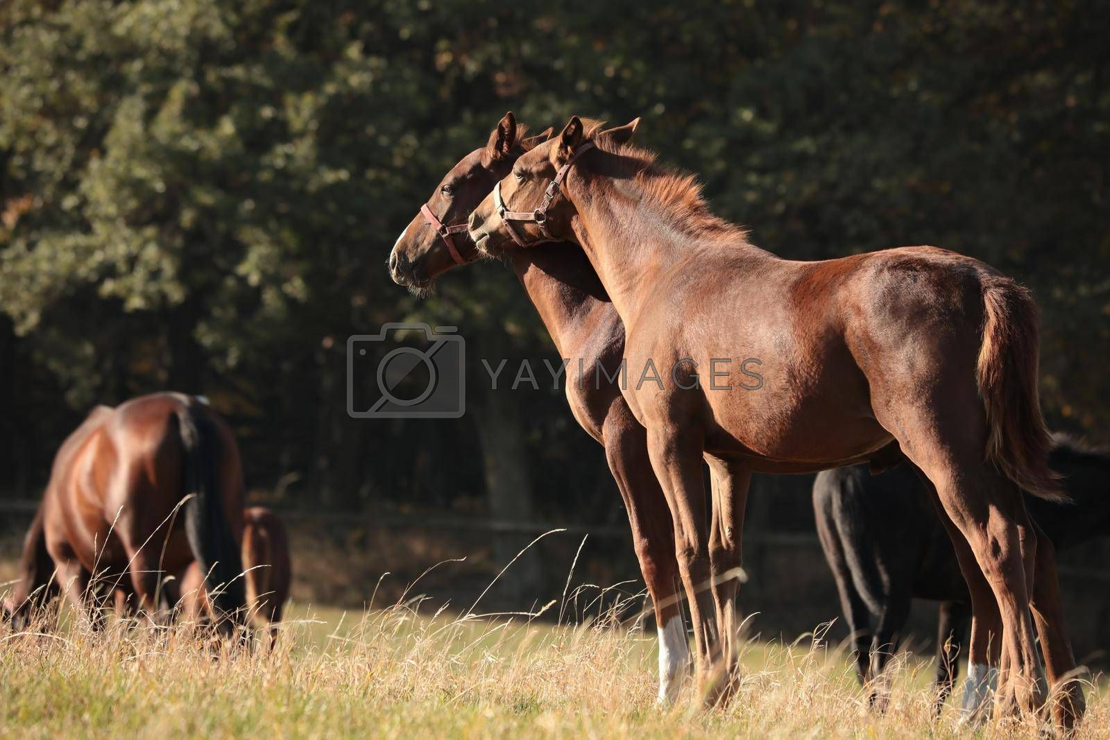 Foal in a meadow against the trees in the morning.