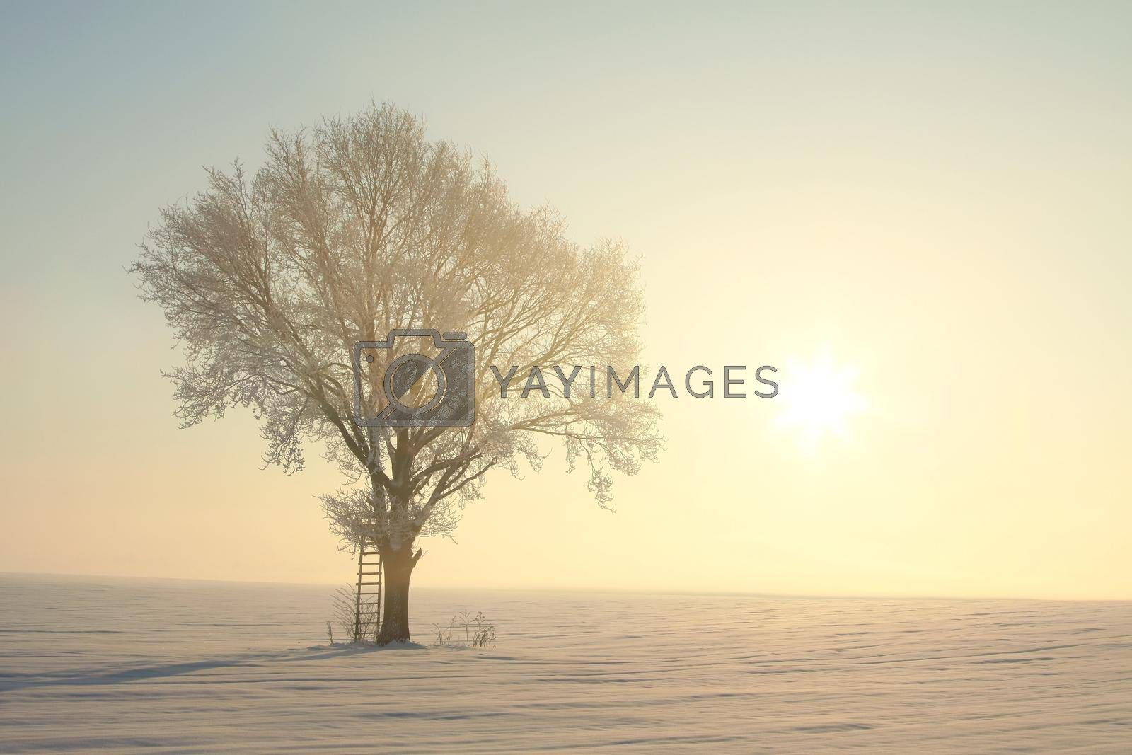 Winter landscape of frosted tree against a blue sky.