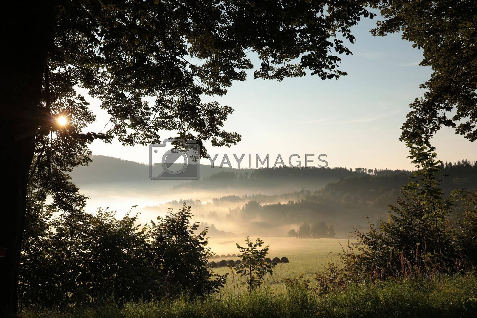 Rural landscape on a misty summer morning.