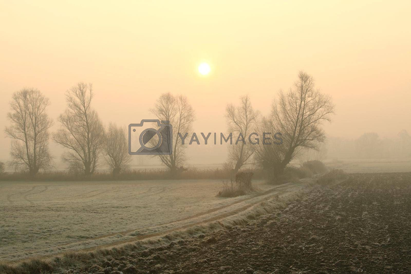 Rural landscape in the foggy November morning.