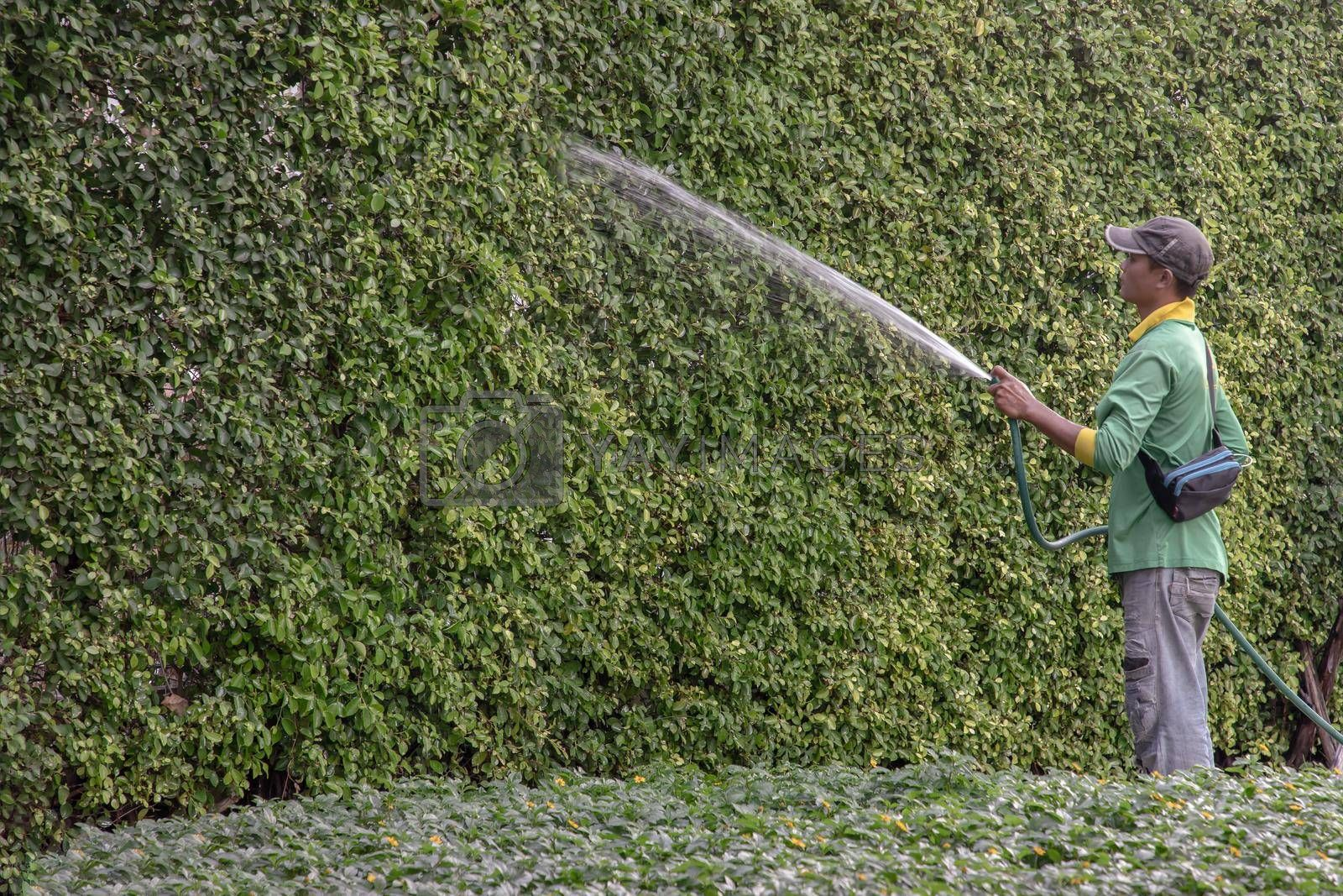 Bangkok, Thailand - Jan 14, 2021 : The gardener was using a rubber hose to water the trees. Injection of water from rubber tube, Copy space, Focus and blur.