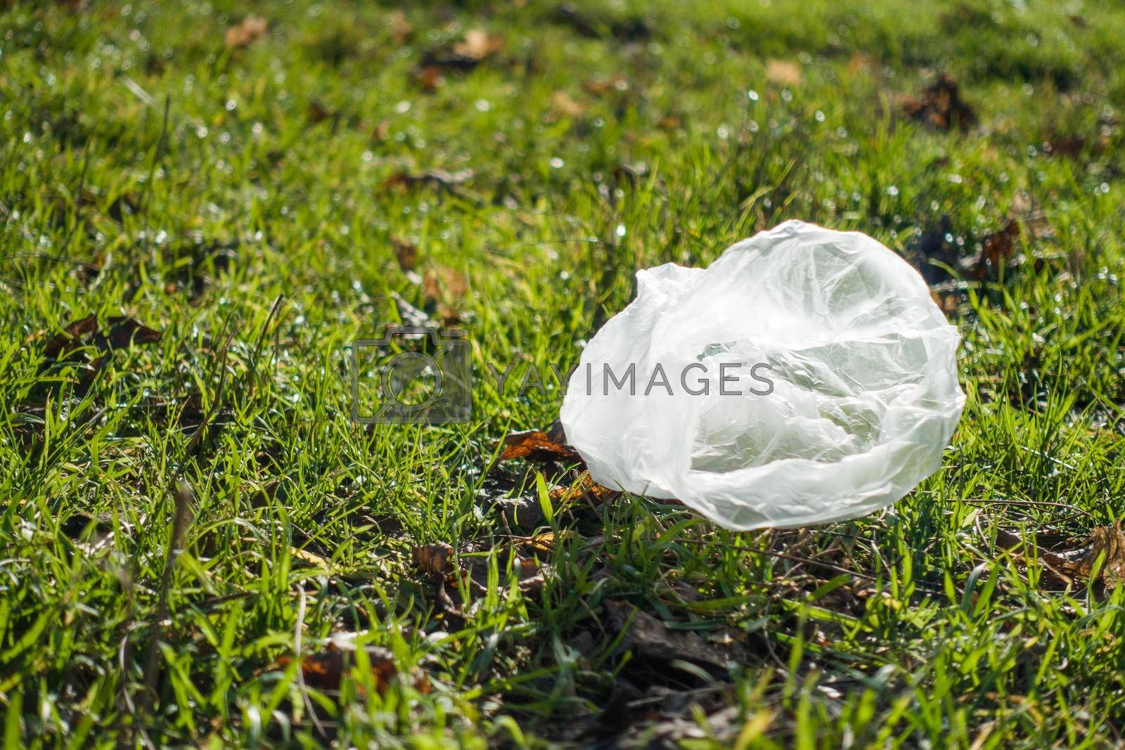 Royalty free image of The plastic bag lies on the green grass. by Jannetta