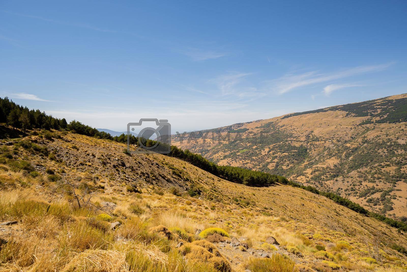 High mountain landscape in summer