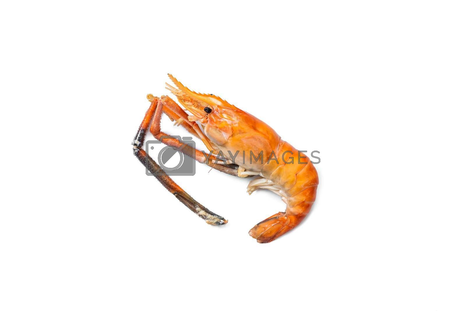 Grilled large river prawn are ready to eat isolated on white background.