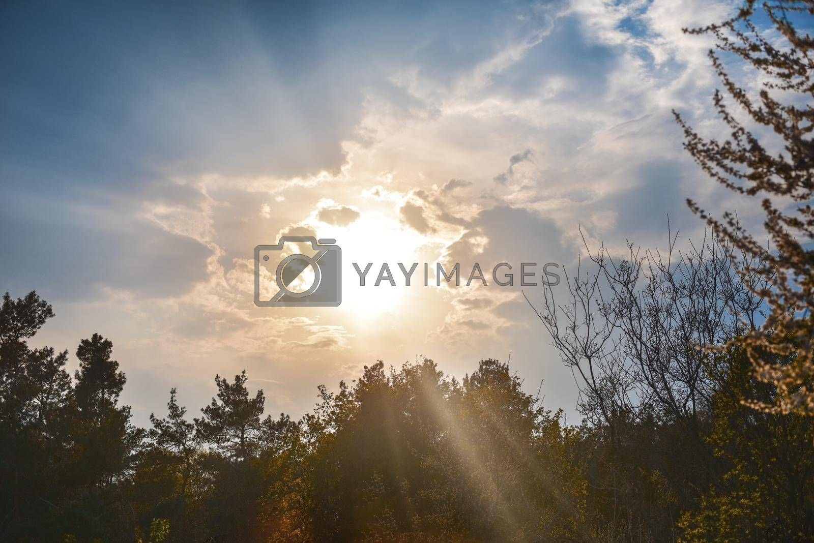Forest Trees. Nature green wood sunlight Background. by Nickstock
