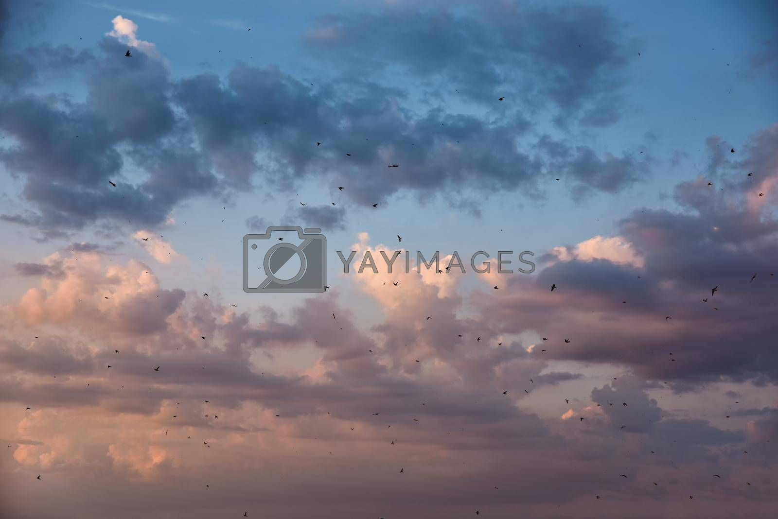 many birds flying in the sky, nature series by Nickstock