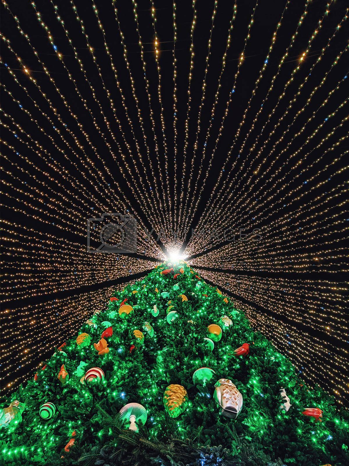 The main Christmas tree of Ukraine. by Nickstock