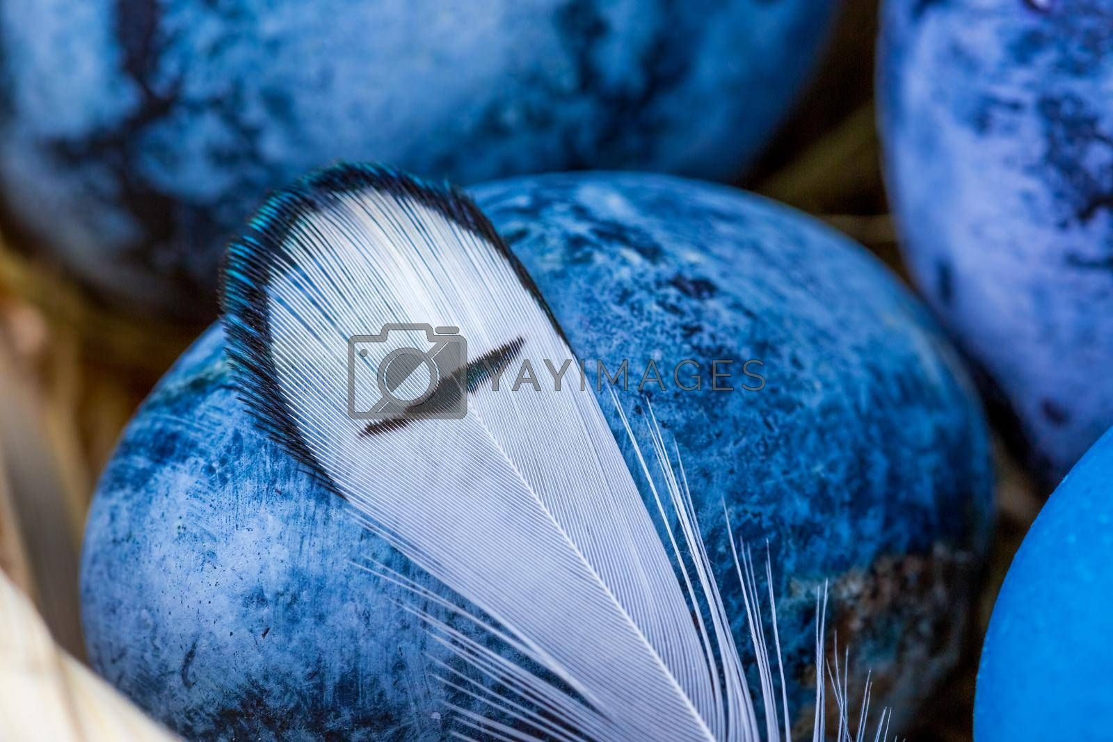 Blue Easter eggs close-up, selective focus, shallow depth of field. Concept, healthy food, spring religious holidays.