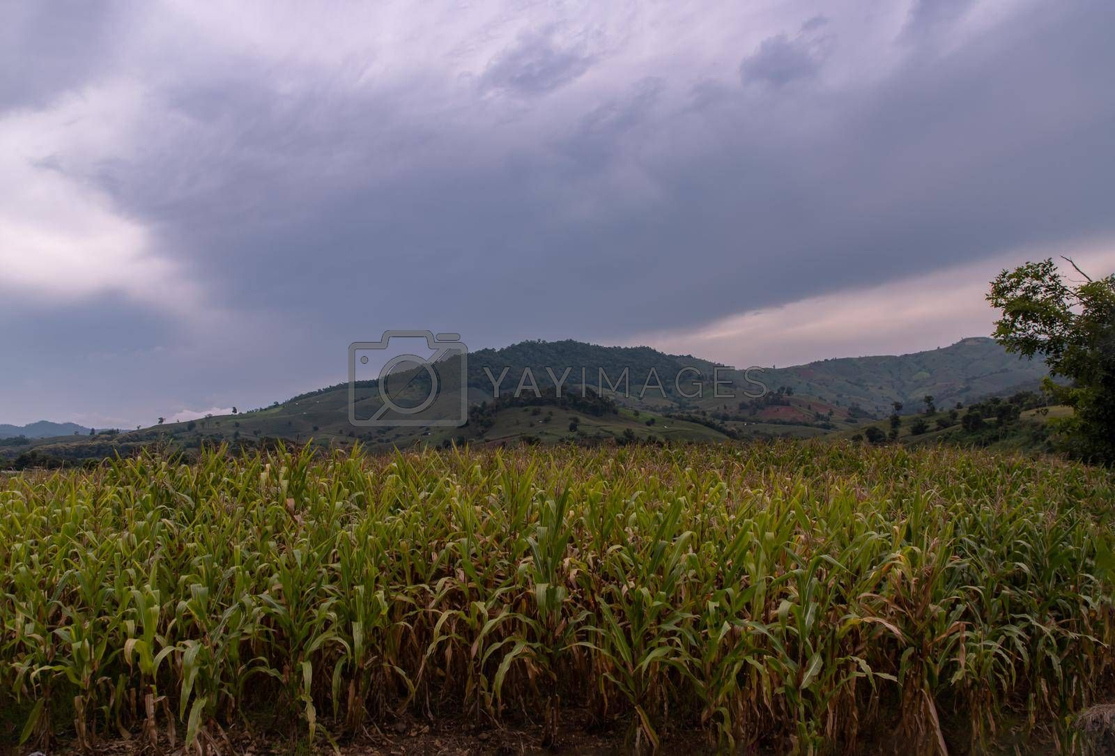 Fields landscape scenery view of Thailand with local villages and behind is forest mountains with beautiful morning sunlight clouds and bright blue sky. No focus, specifically.