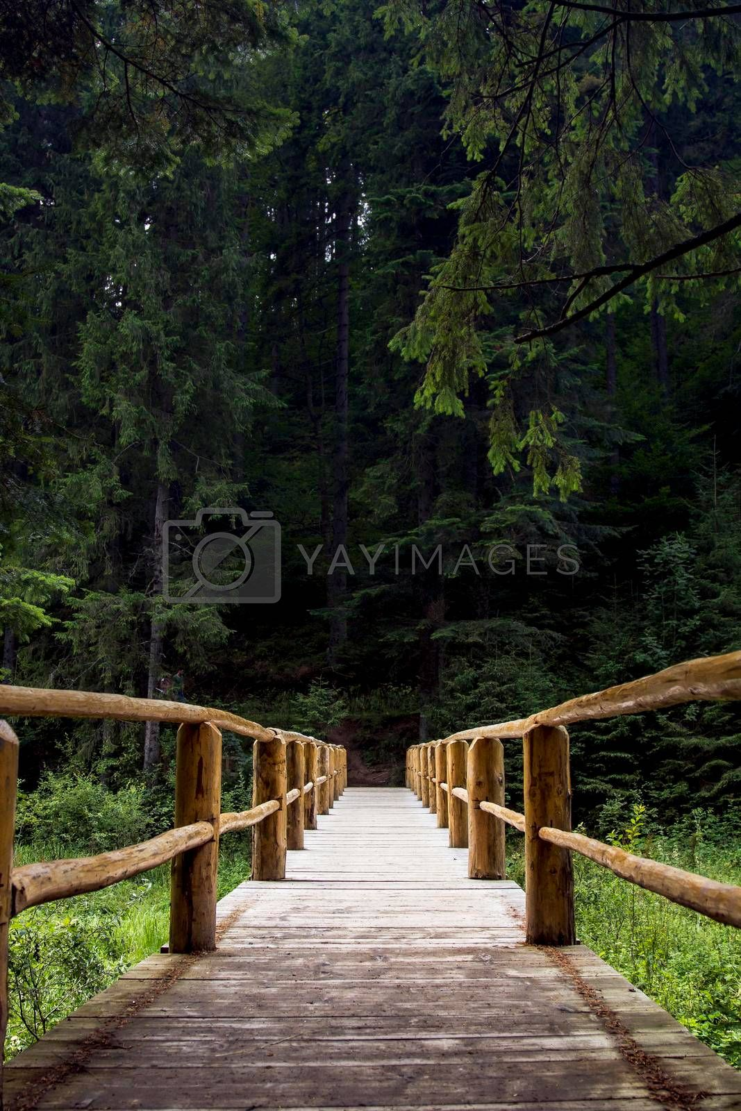 Royalty free image of Wooden bridge over the river. Green and dense forest at the end of the bridge. by Jannetta