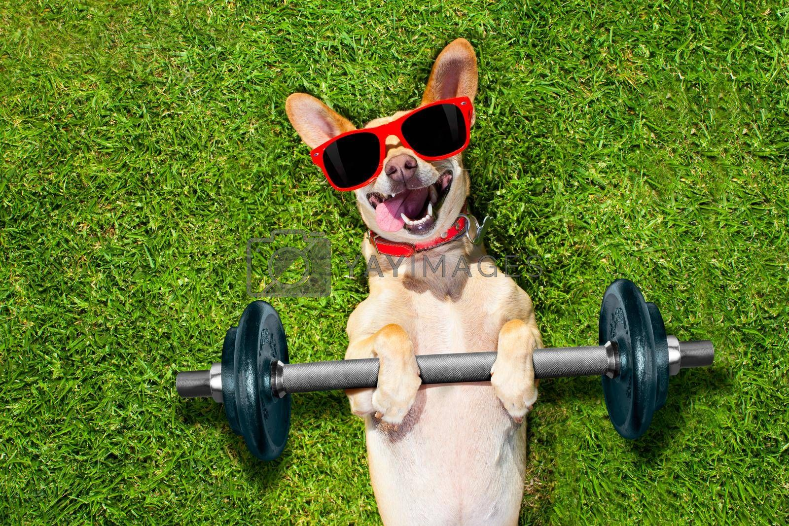 Royalty free image of personal trainer sport fitness dog by Brosch
