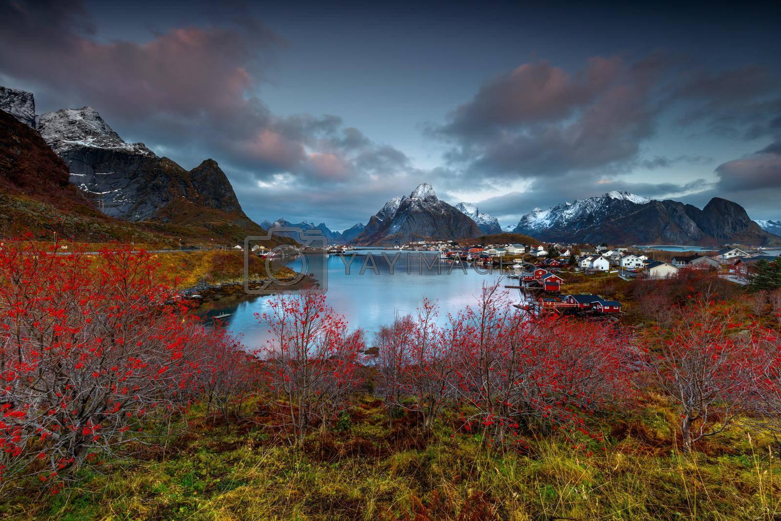Amazing View of a Nordland Lands. Beautiful Backwater Among High Nordic Mountains of Reine. Moskenesoya. Lofoten. Norway.