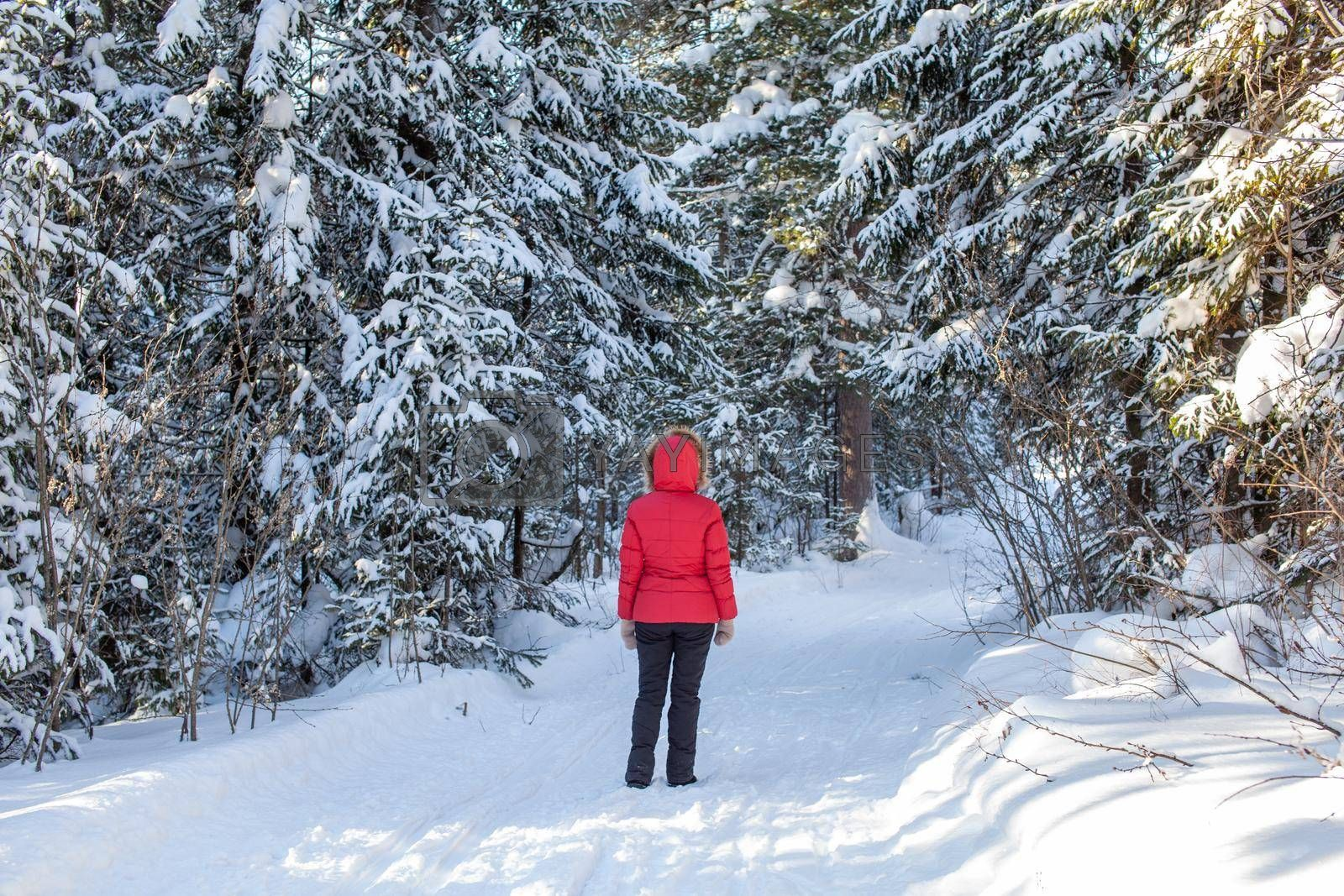 A girl in a red jacket walks through a snow-covered forest on a winter day. Rear view. A man on the background of a beautiful winter nature