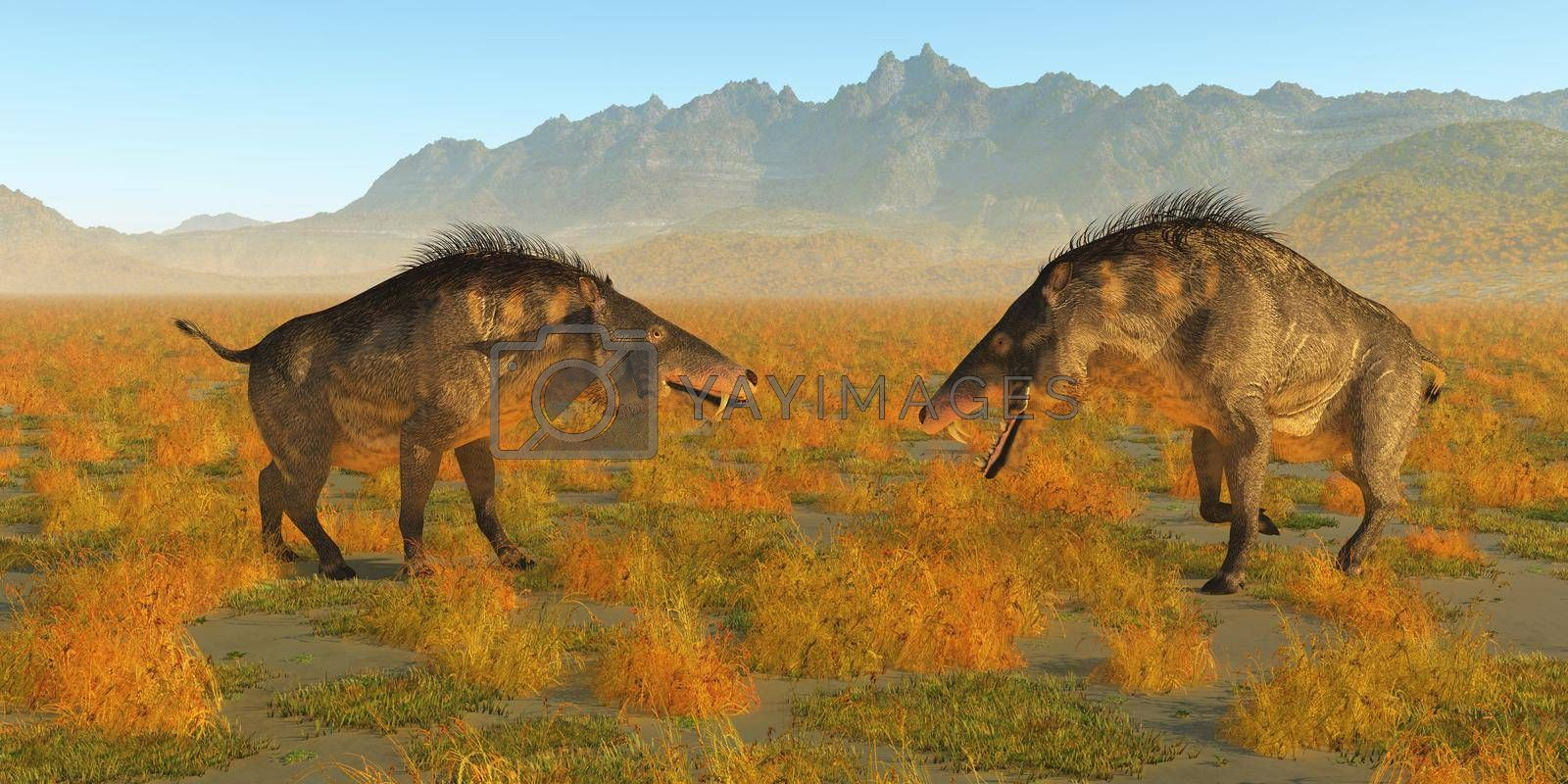 Two omnivorous Entelodon pigs face each other in a territorial fight during Europe's prehistoric Eocene Period.