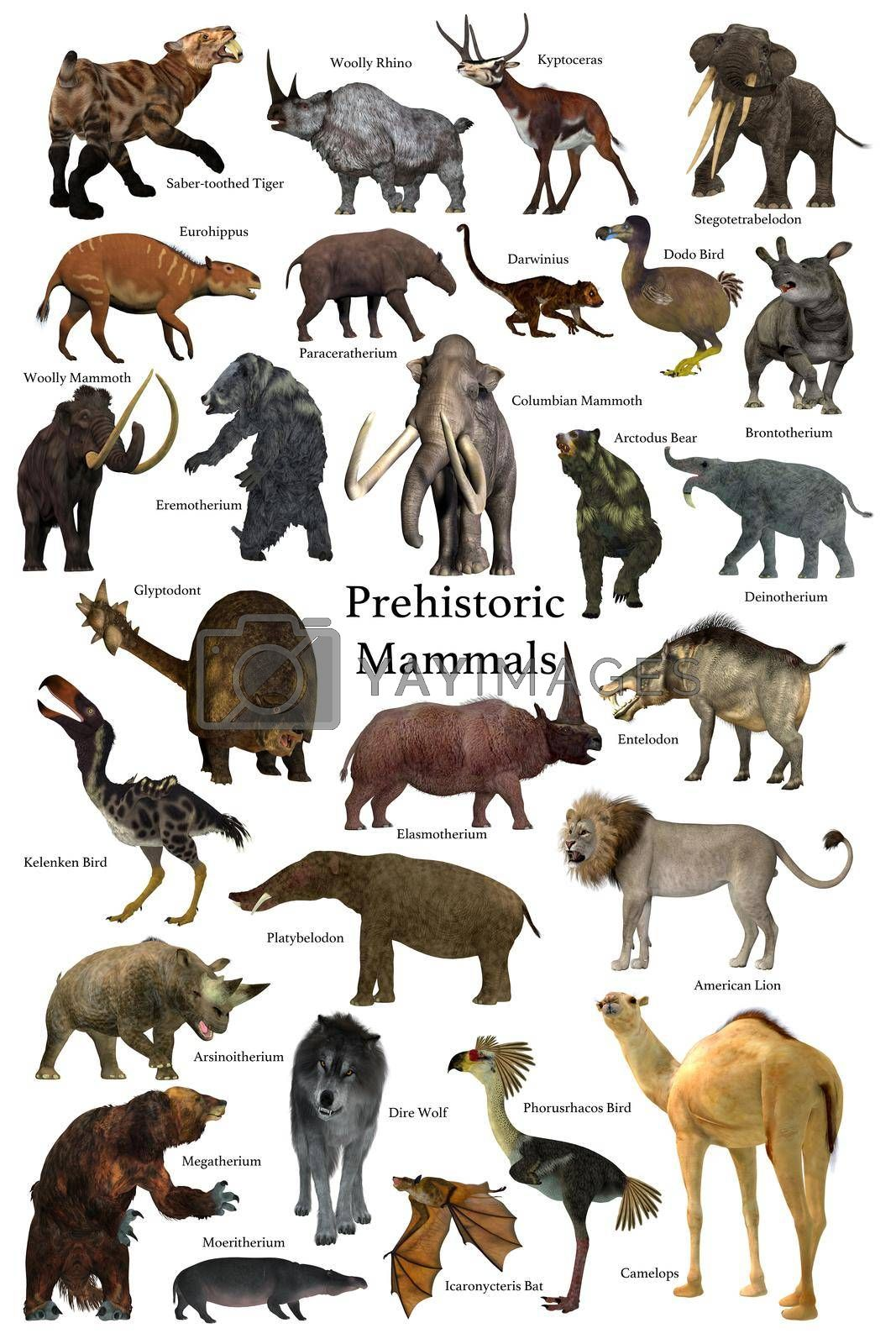A collection of some of the better known mammals that lived during the Cenozoic Era.