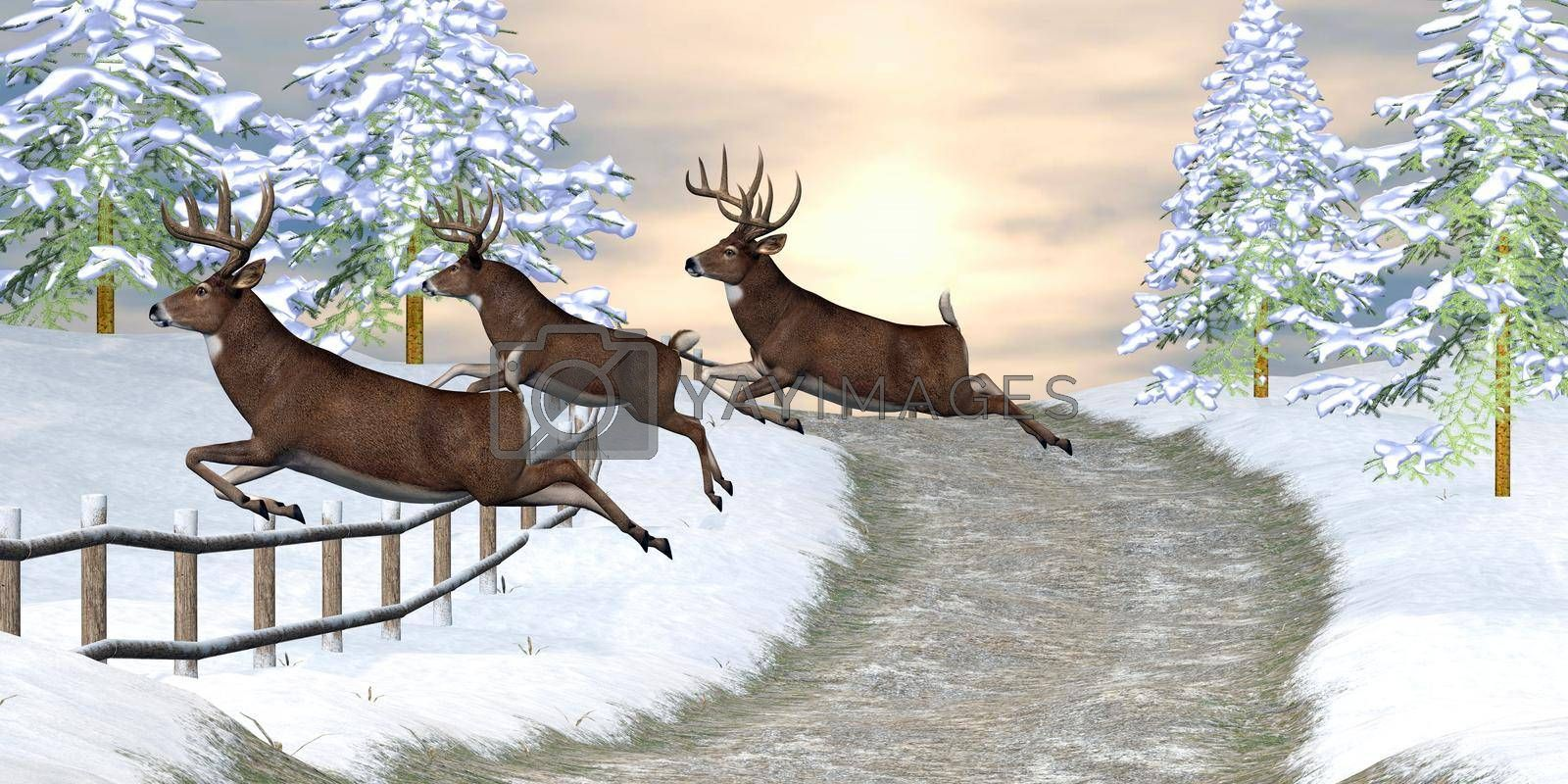 Royalty free image of Whitetail Deer Jumping Fence by Catmando