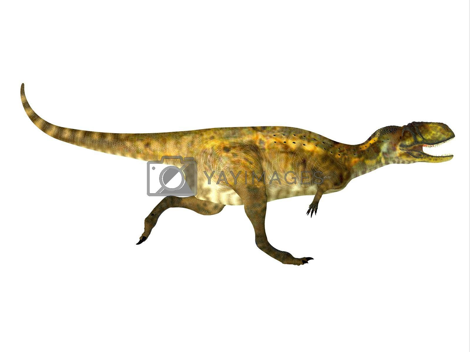 Abelisaurus was a theropod carnivorous dinosaur that lived during the Cretaceous Period of Argentina.
