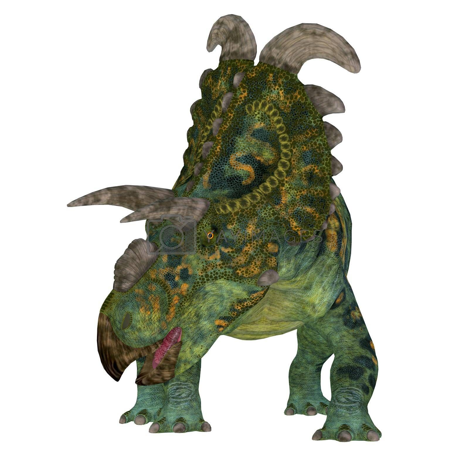 The Ceratopsian herbivorous dinosaur Albertaceratops lived in Alberta, Canada during the Cretaceous Period.