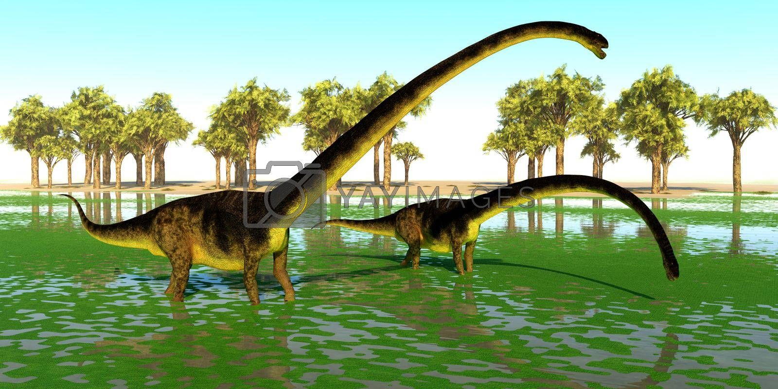 Two Omeisaurus dinosaurs eat water plants for the mineral content during the Jurassic Period of China.