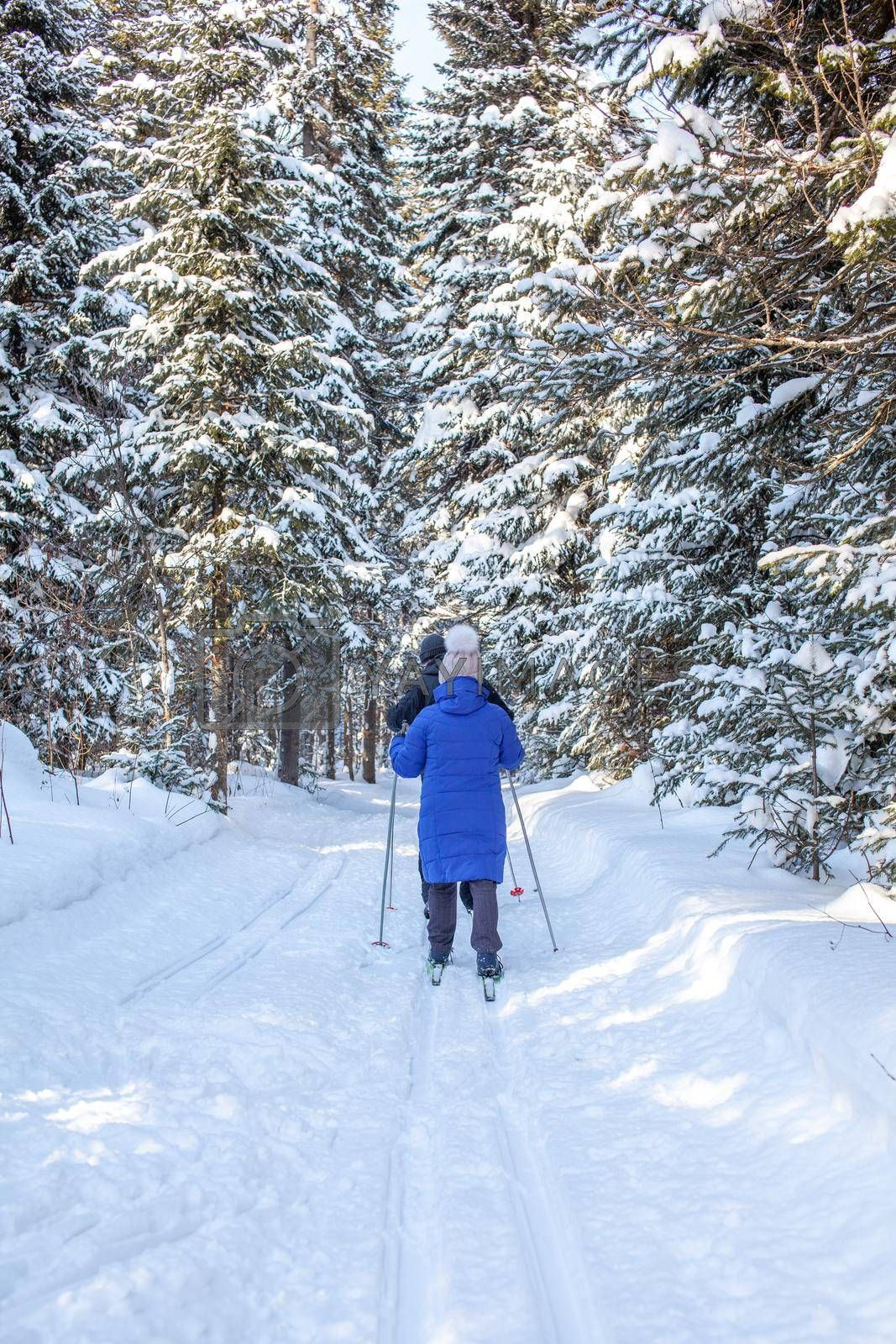 A girl in a blue jacket goes skiing in a snowy forest in winter. The view from the back. Snow background with skis between the trees. Ski trail
