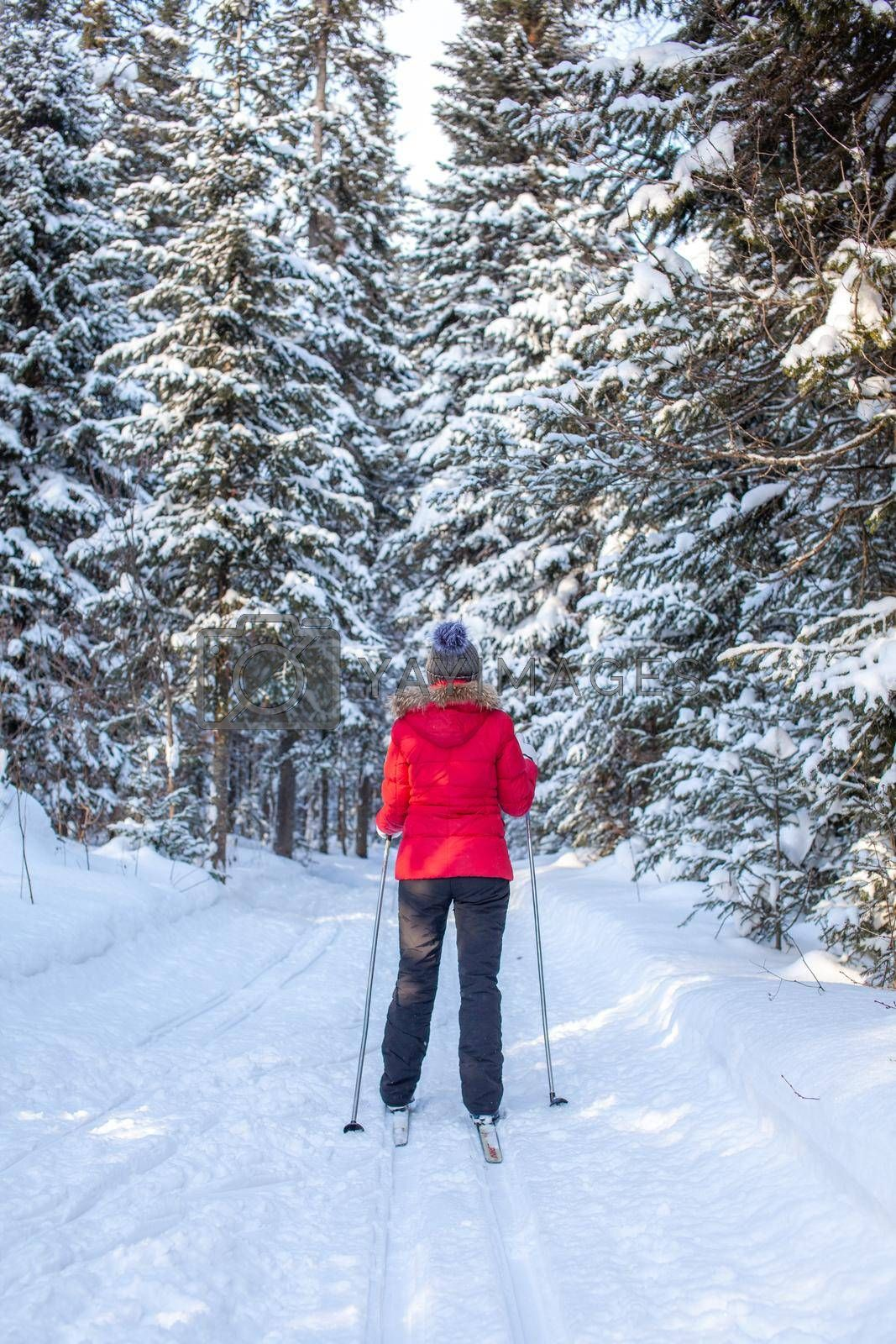 A girl in a red jacket goes skiing in a snowy forest in winter.  by AnatoliiFoto