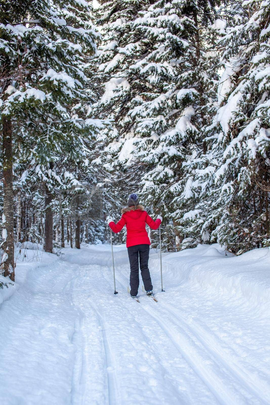 A girl in a red jacket goes skiing in a snowy forest in winter. The view from the back. Snow background with skis between the trees.