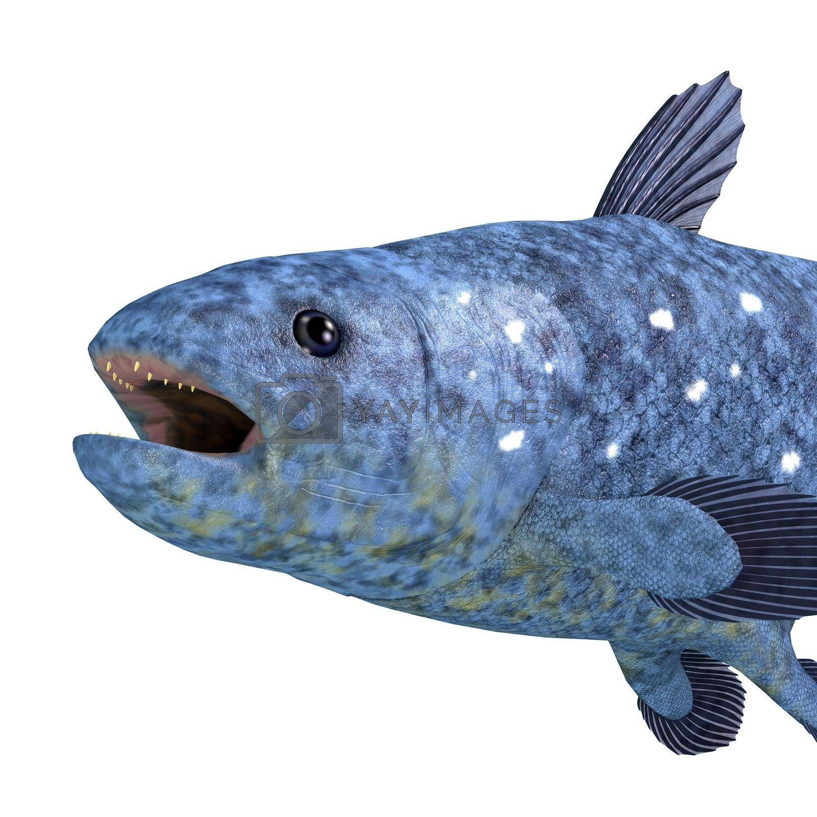 The Coelacanth fish was thought to be extinct but has found to still be a viable creature living in the world's oceans.