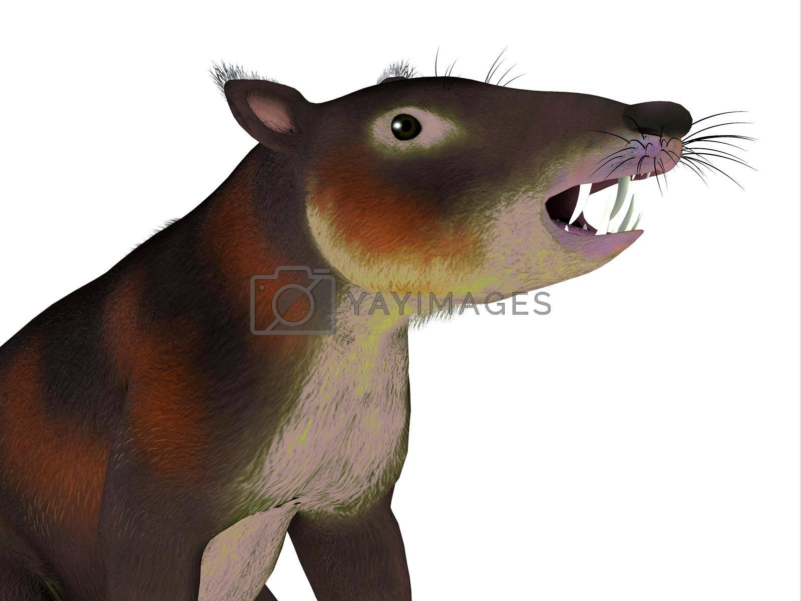 Royalty free image of Cronopio Mammal Head by Catmando