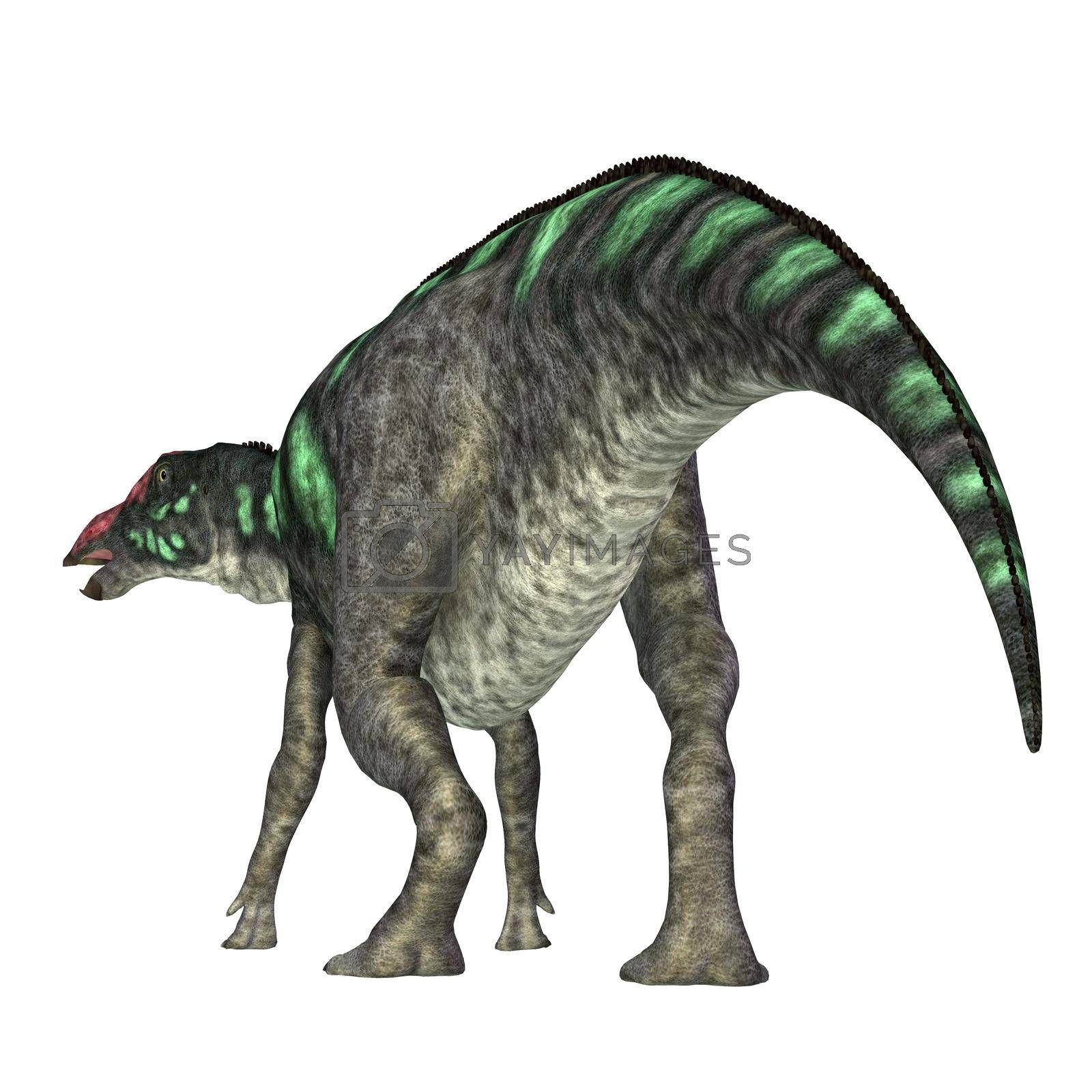 Maiasaura was a herbivorous duck-billed Hadrosaur dinosaur that lived in Montana during the Cretaceous Period.