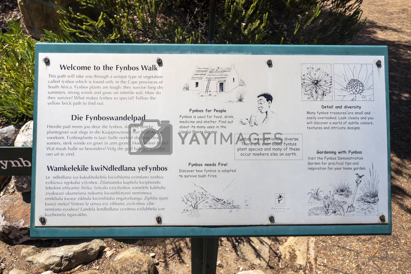 Fynbos Walk green turquoise information sign in Kirstenbosch, Cape Town, South Africa.