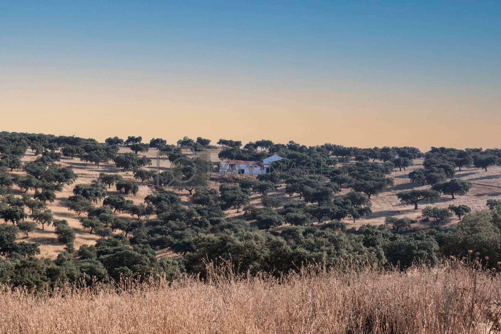 agricultural landscapes in southern Andalusia with a clear sky