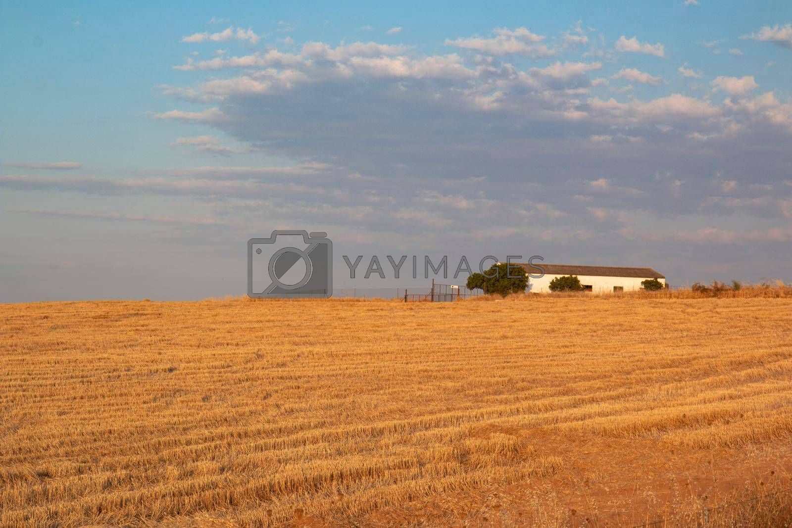 Agricultural farm in southern Andalusia with a cloud filled sky in spain