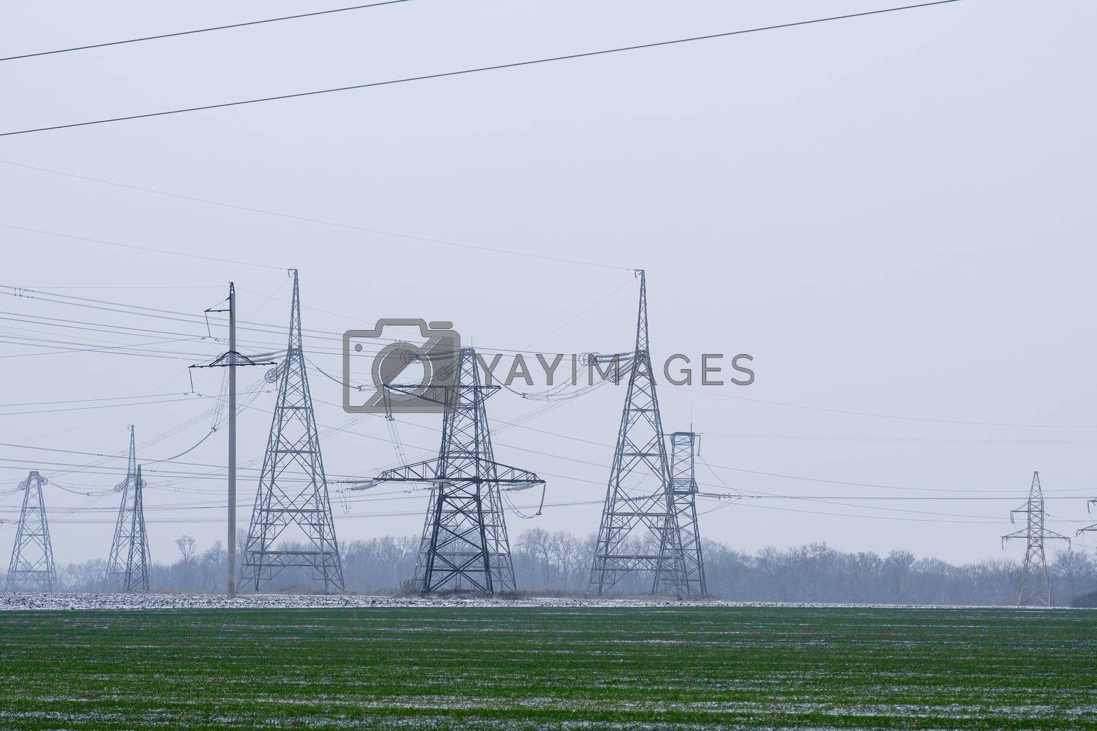 a field of winter wheat. in the background, high-voltage power lines. High quality photo